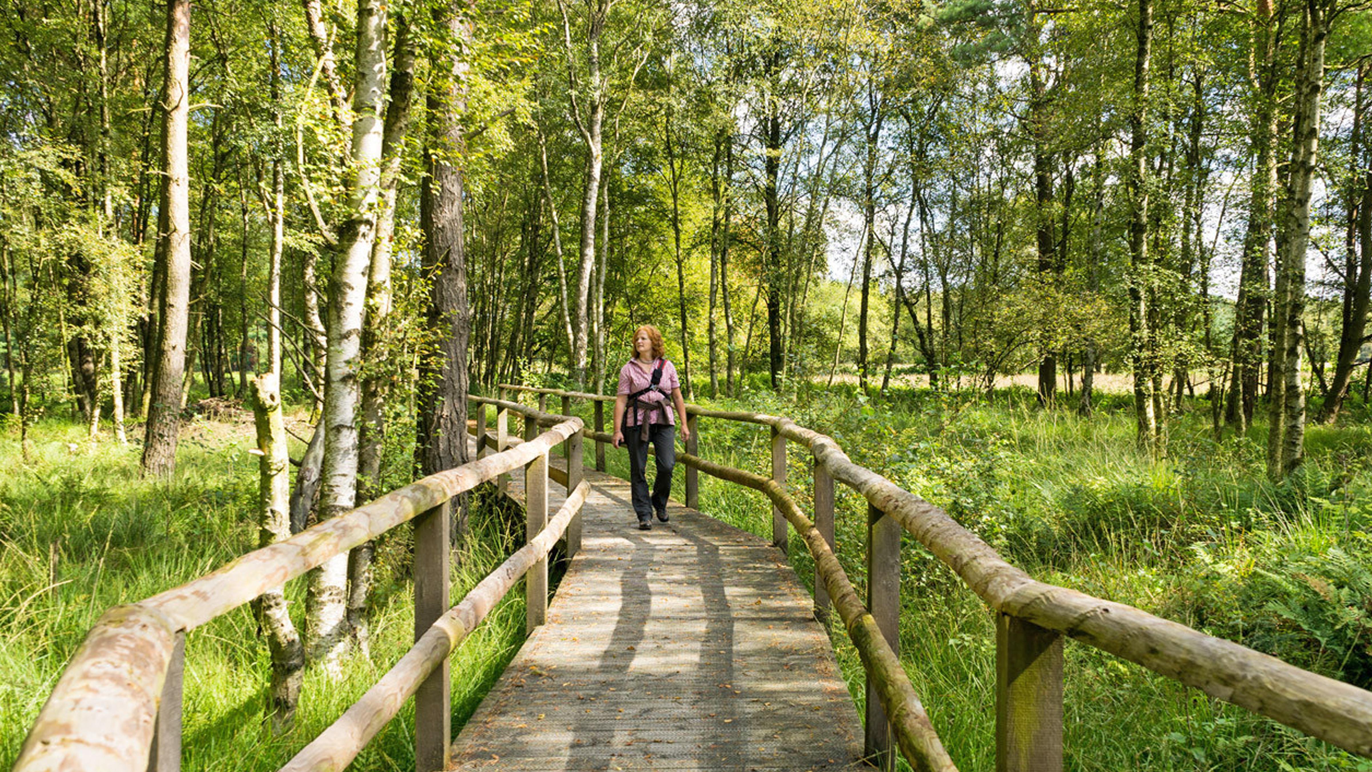 Auf Holzstegen sicher durch das Moor