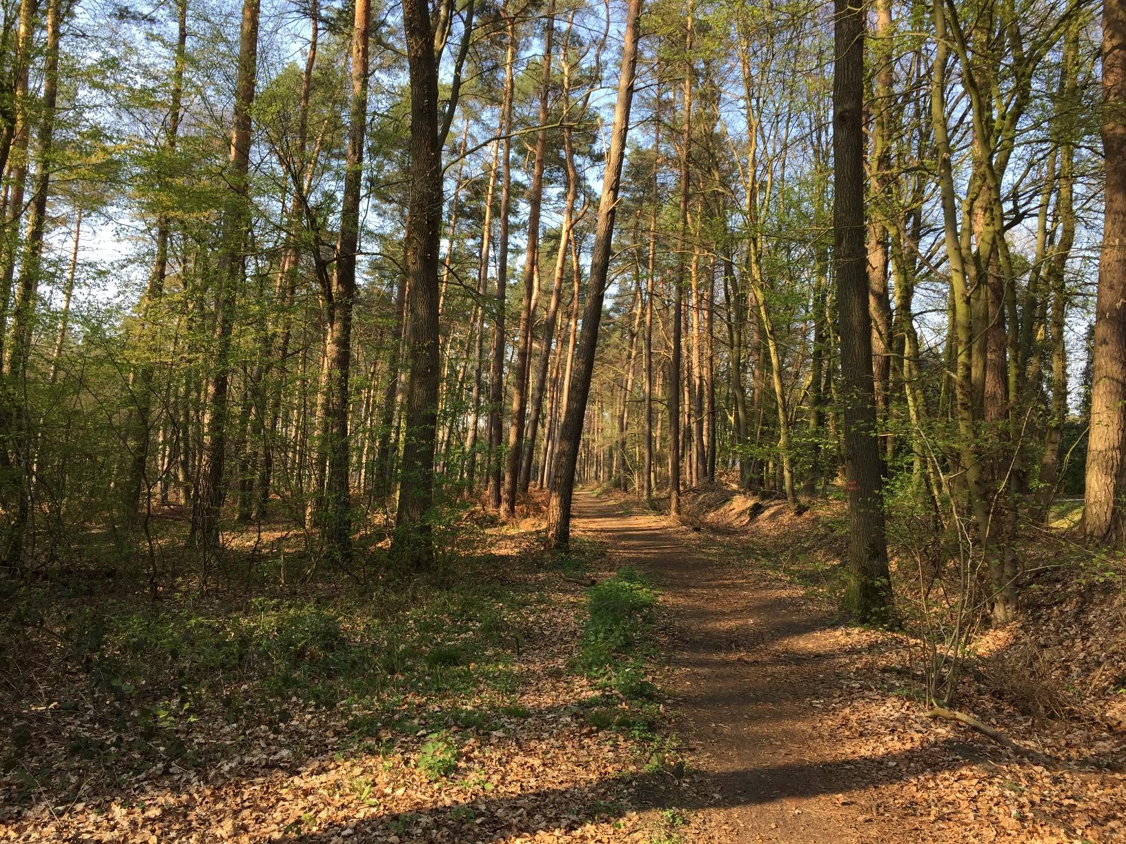 Der Weg führt gemütlich durch den Wald