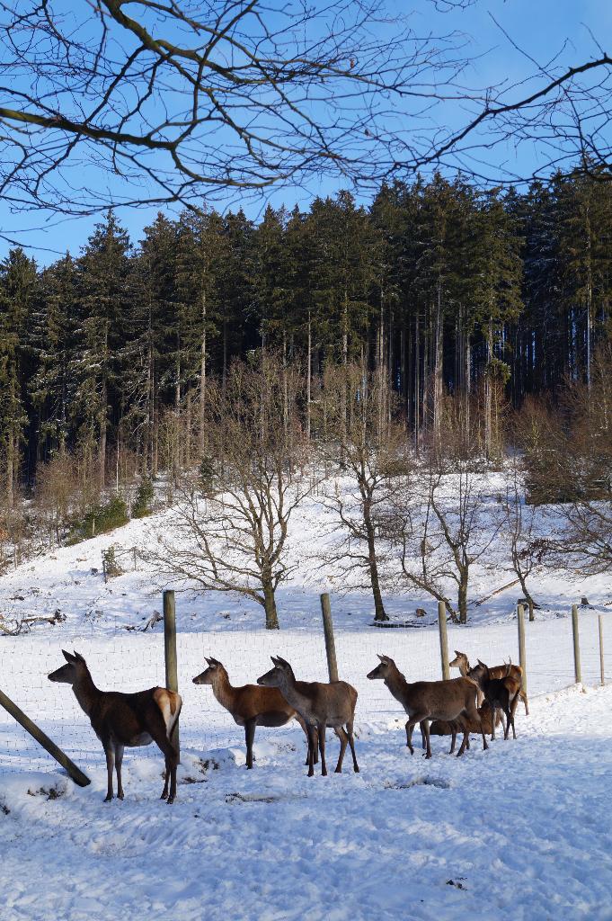 Wildgehege im Winter
