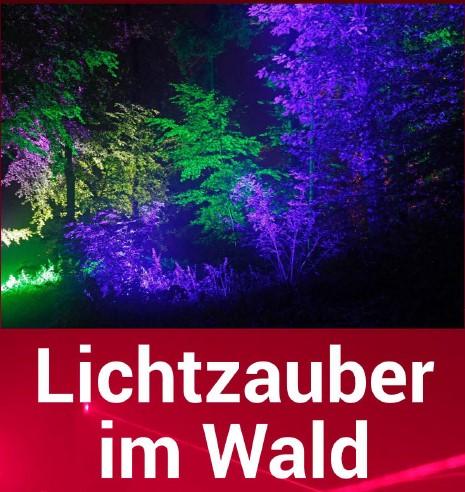Lichtzauber im Wald