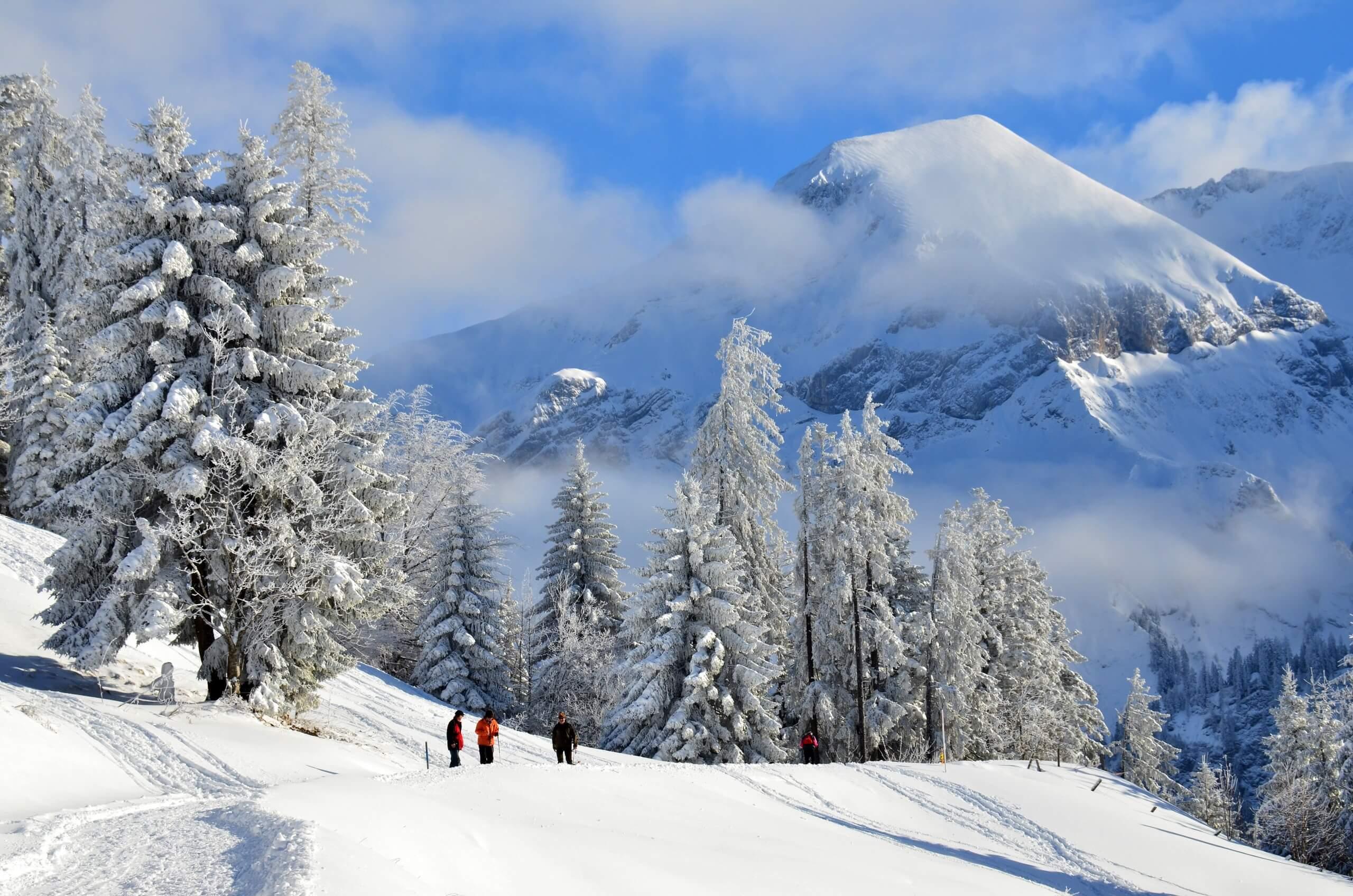 aeschi-wandern-winter-wald-gruppe