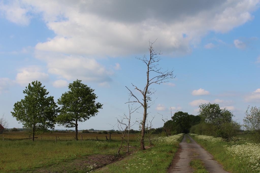 Oppenweher Moor in Stemwede