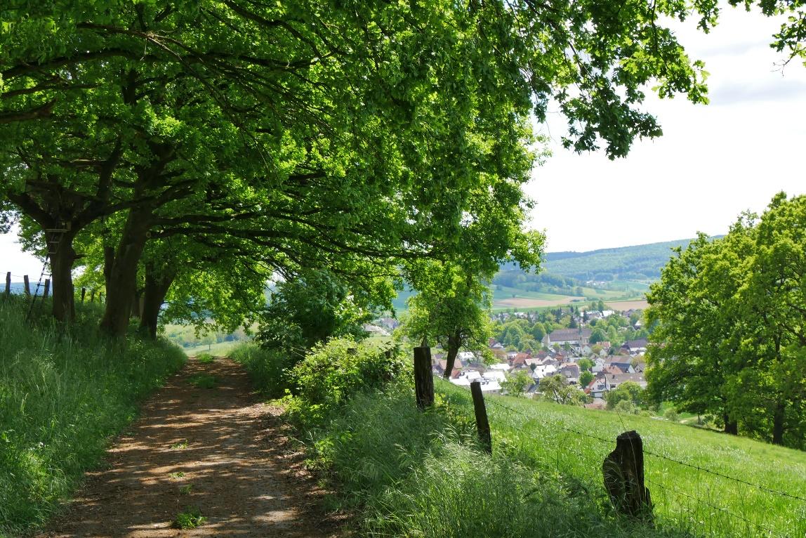 Ausblick auf Brenkhausen