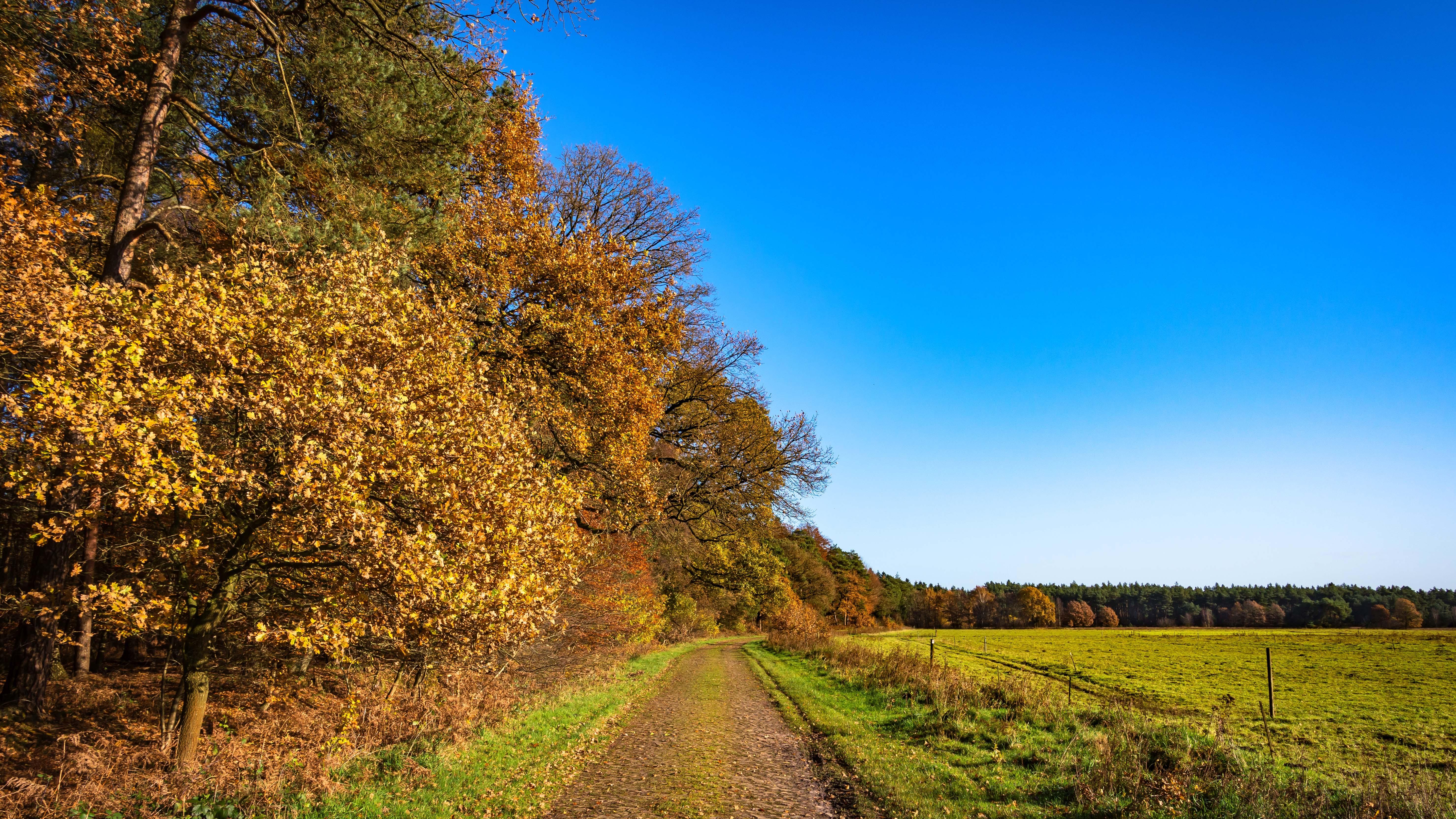 Am Waldrand geht es ein Stück parallel mit dem NORDPFAD Rotenburger Wasserreich weiter