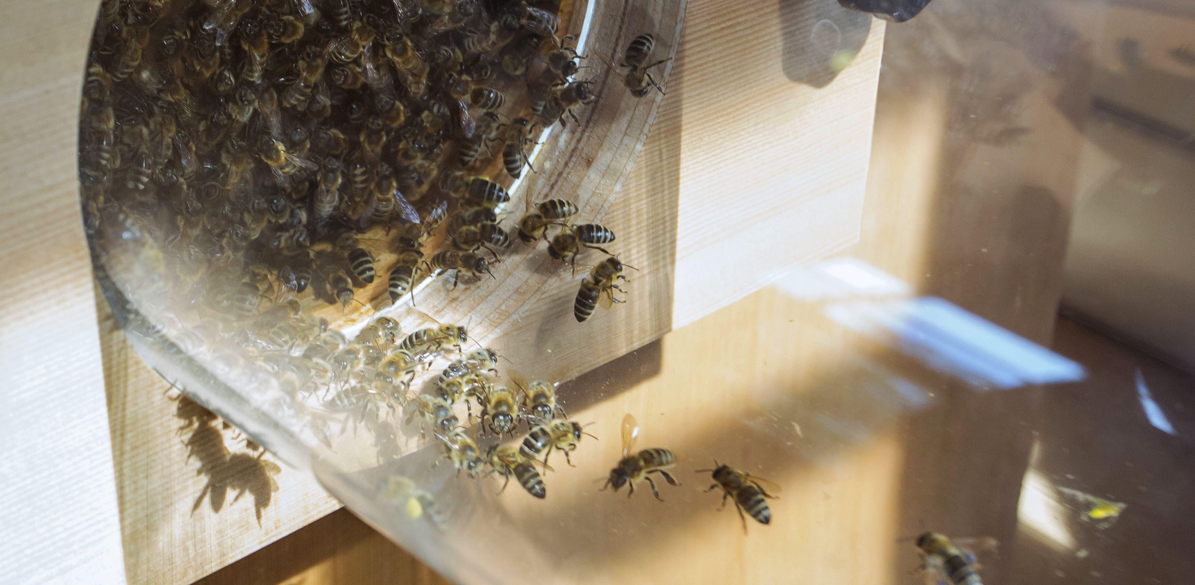 Bayerisches Bienenmuseum Illertissen