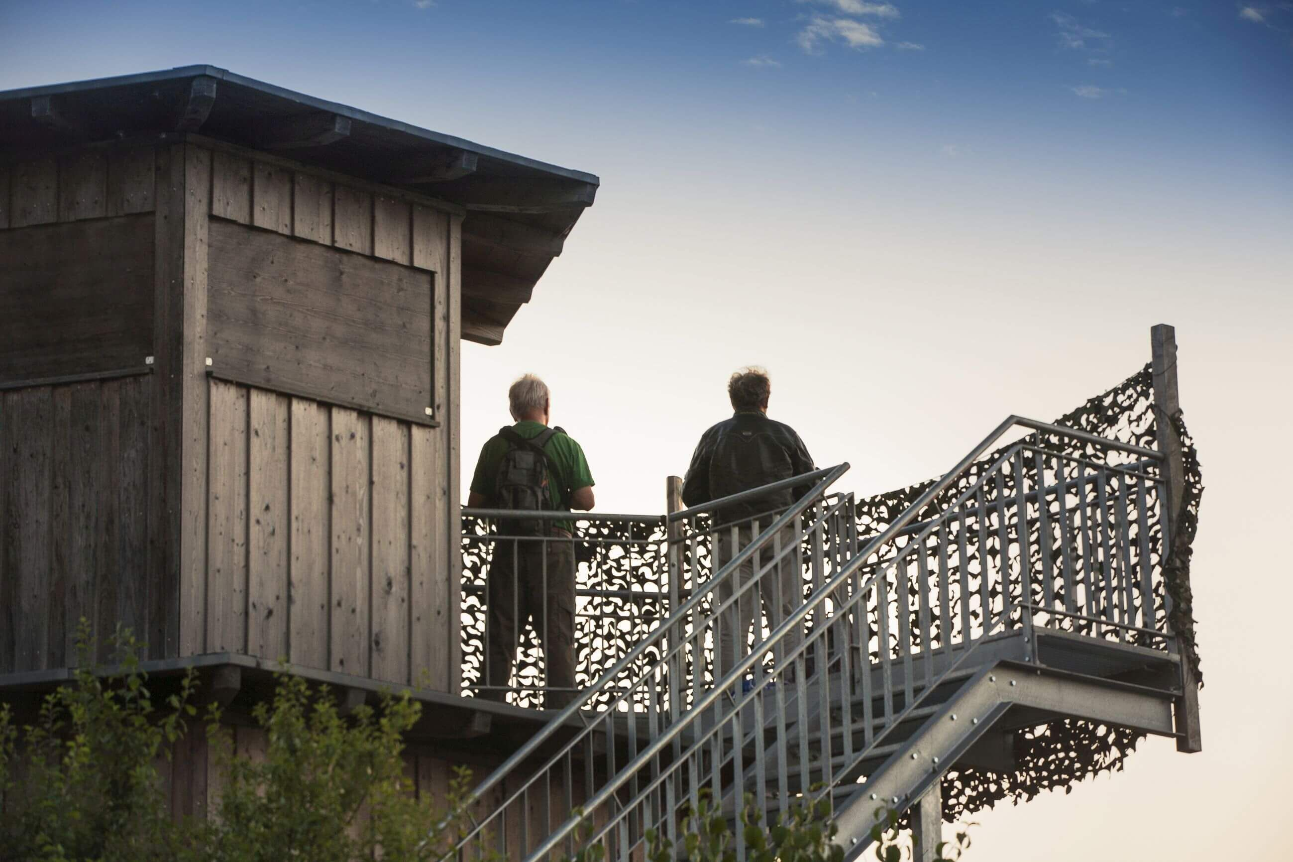 Vogelbeobachtung am Plessenteich in Neu-Ulm