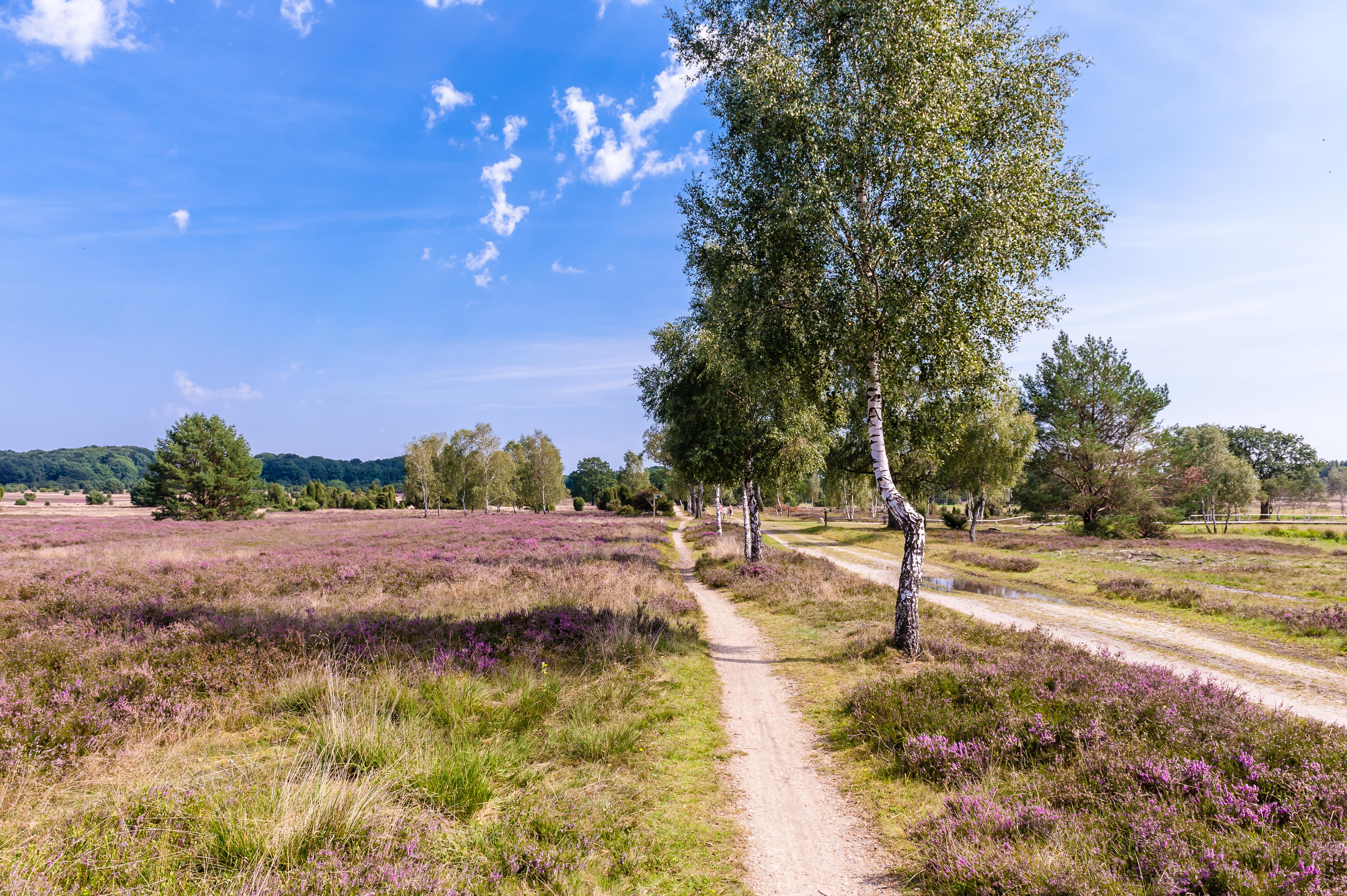 Wanderweg Niederhaverbeck