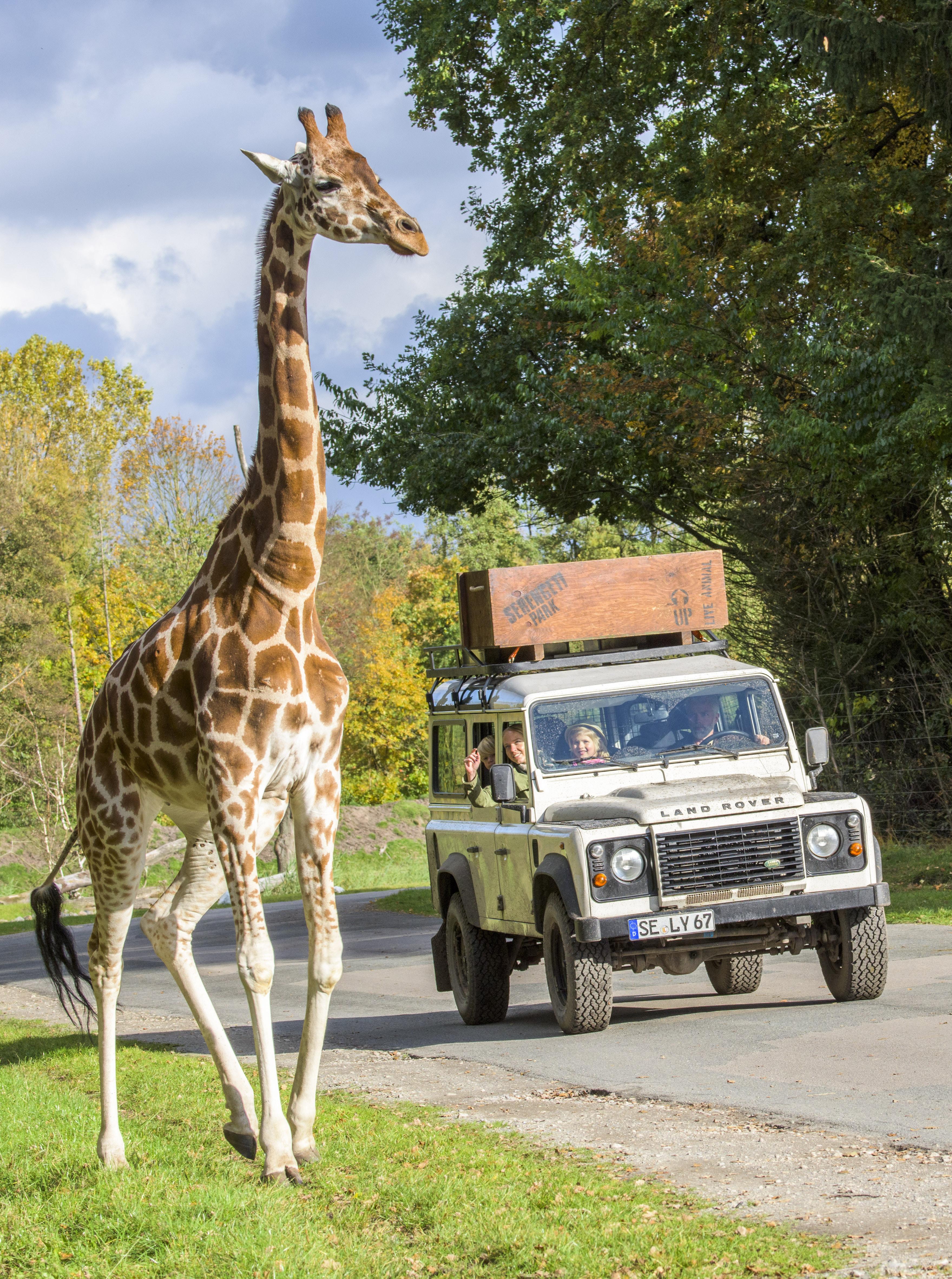 serengeti-safari-giraffe