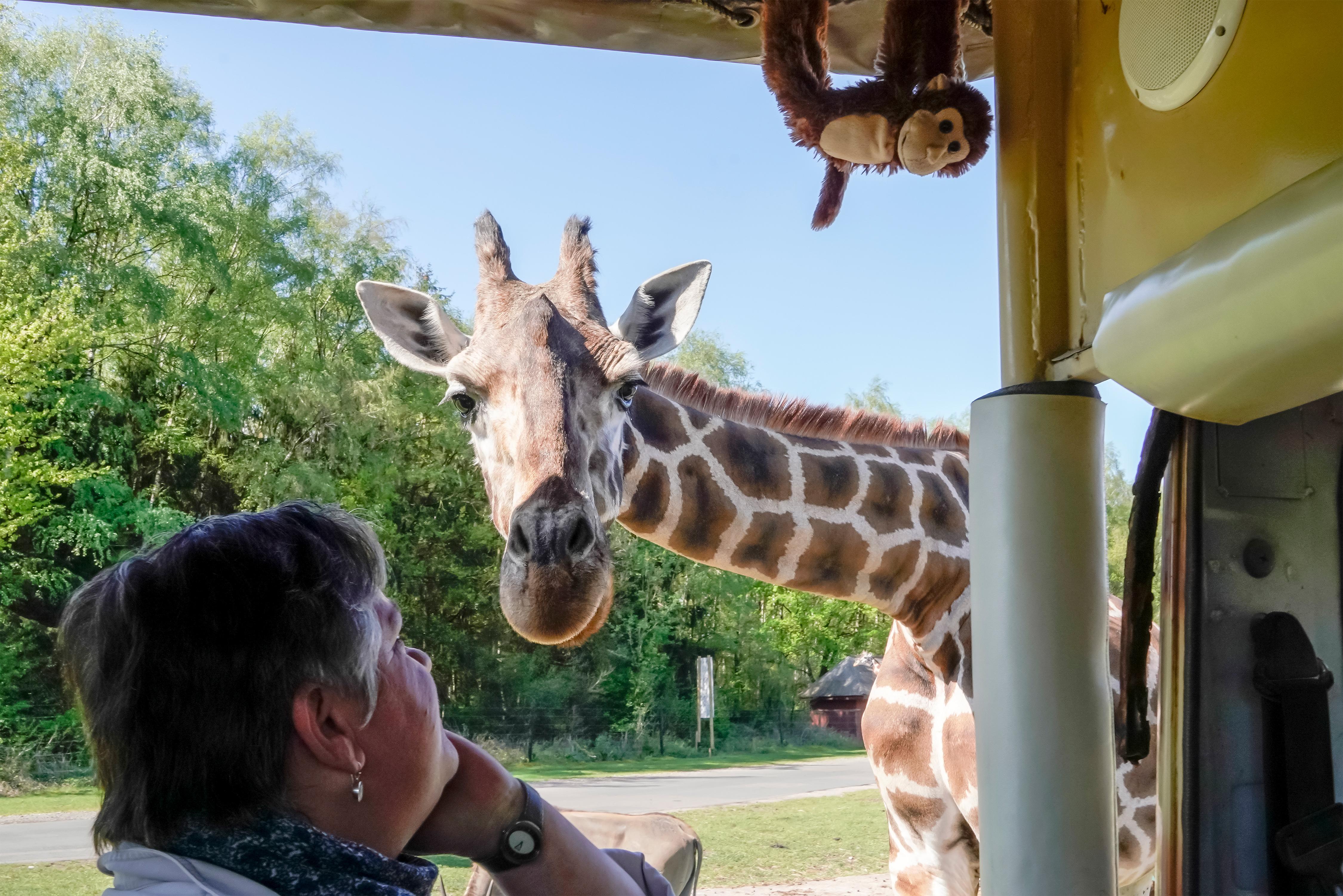 serengeti-safari-vip-jeep-tour