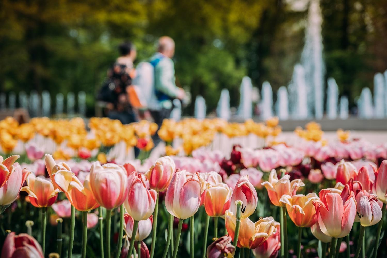 Gartenschau im Frühling mit Blick auf die NIEWELS-Fontäne
