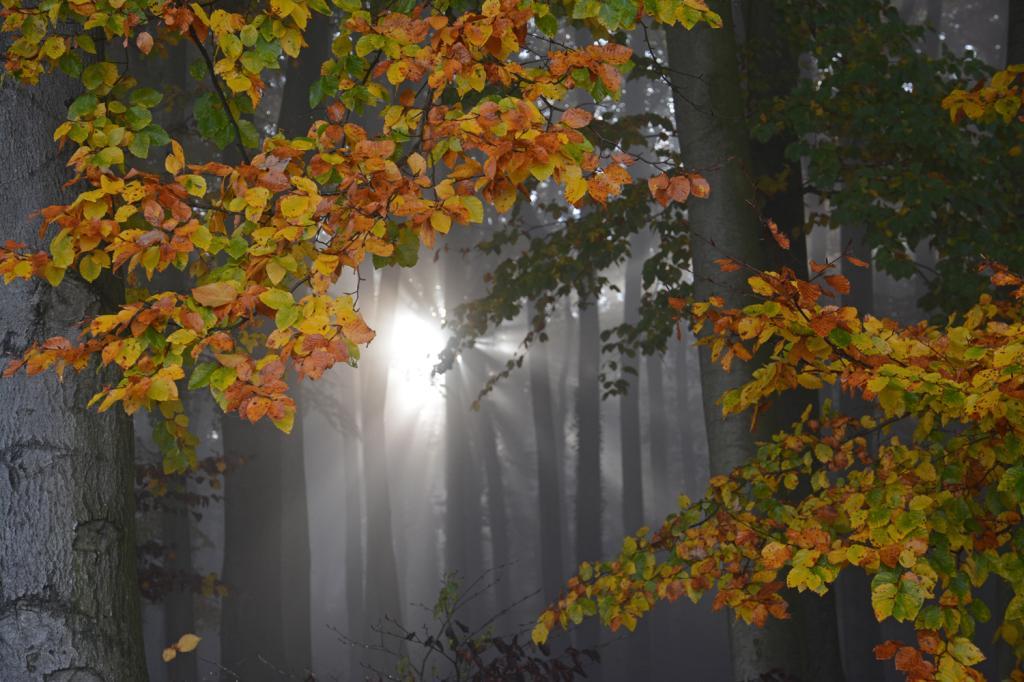 Stemweder Berg im Herbstnebel