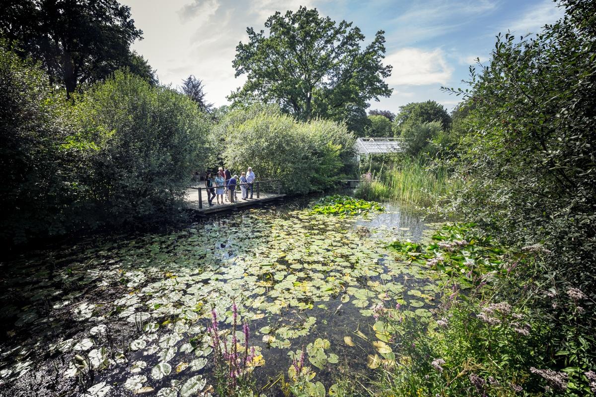 Teichlandschaft im Stadtpark Gütersloh