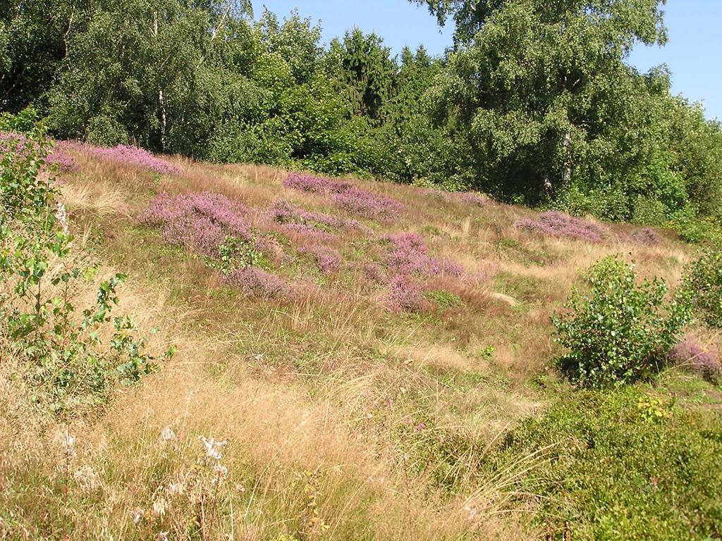Eiberg - Heide
