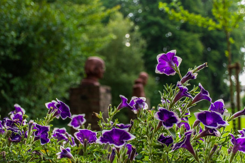 Blühendes am Museum Peter August Böckstiegel
