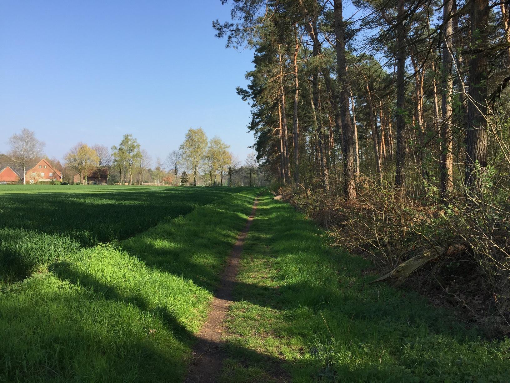 Am Waldrand hat man einen schönen Blick