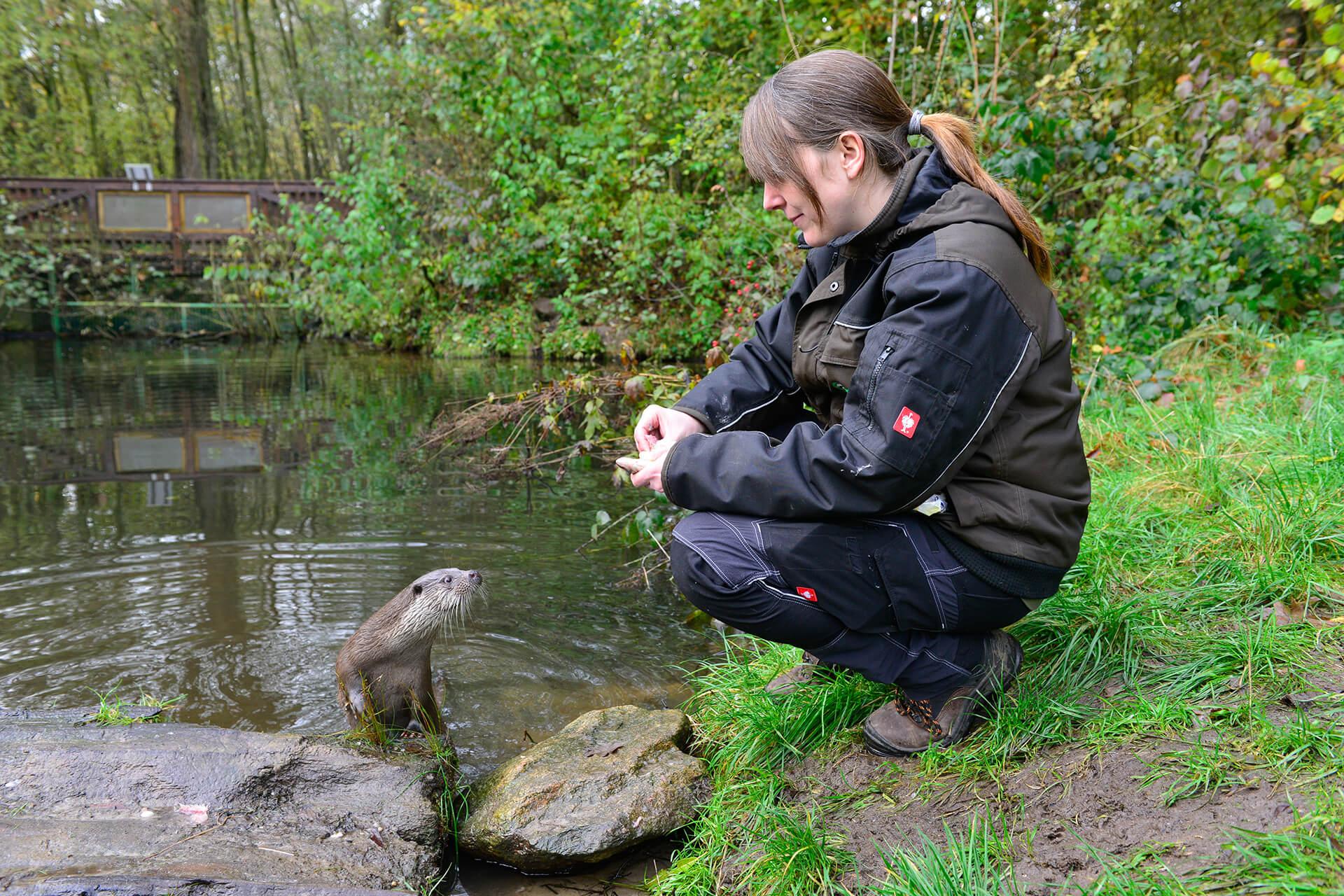 Fütterung eines Fischotters im Otter-Zentrum