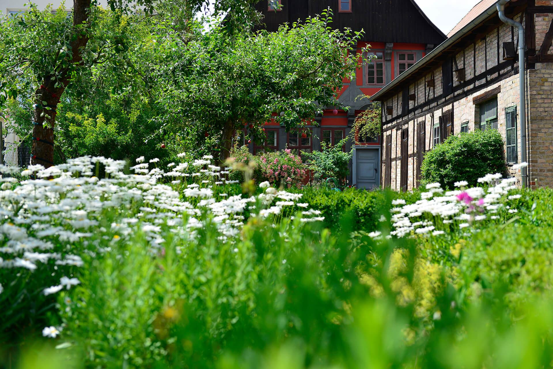 Im Kavalierhausgarten