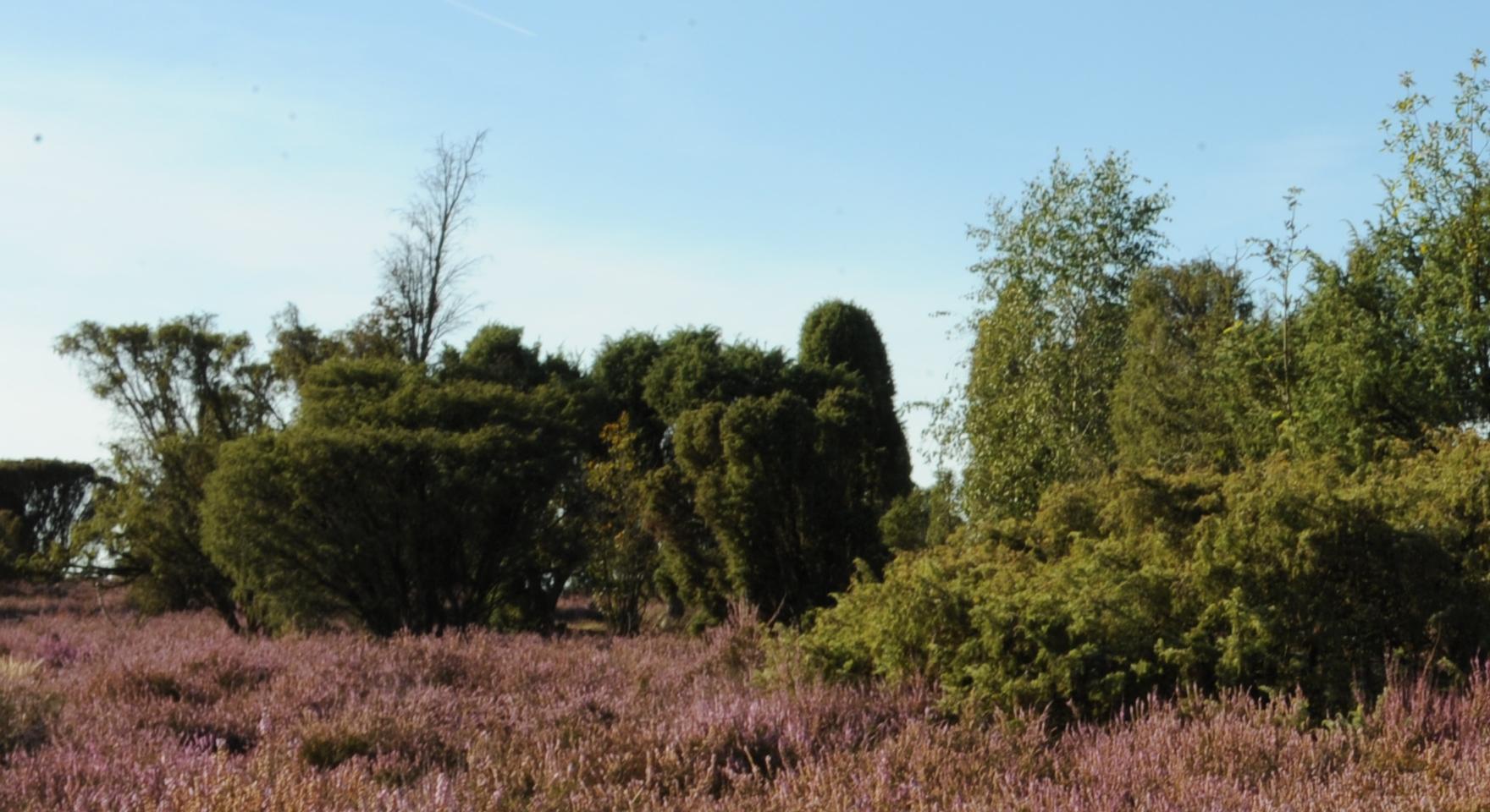 Bokeler Heide (Beispiel)
