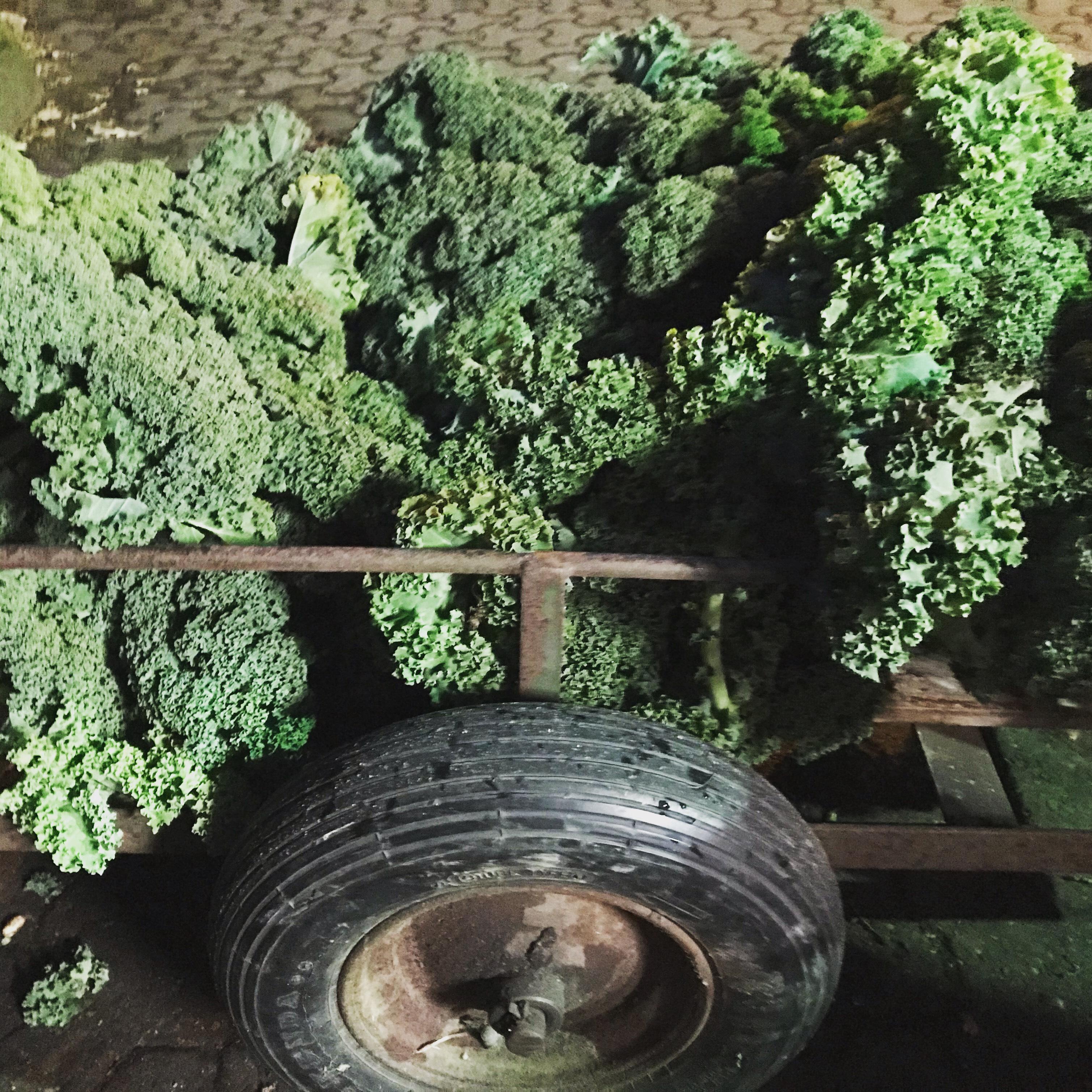 Grünkohl Gemüsekurve