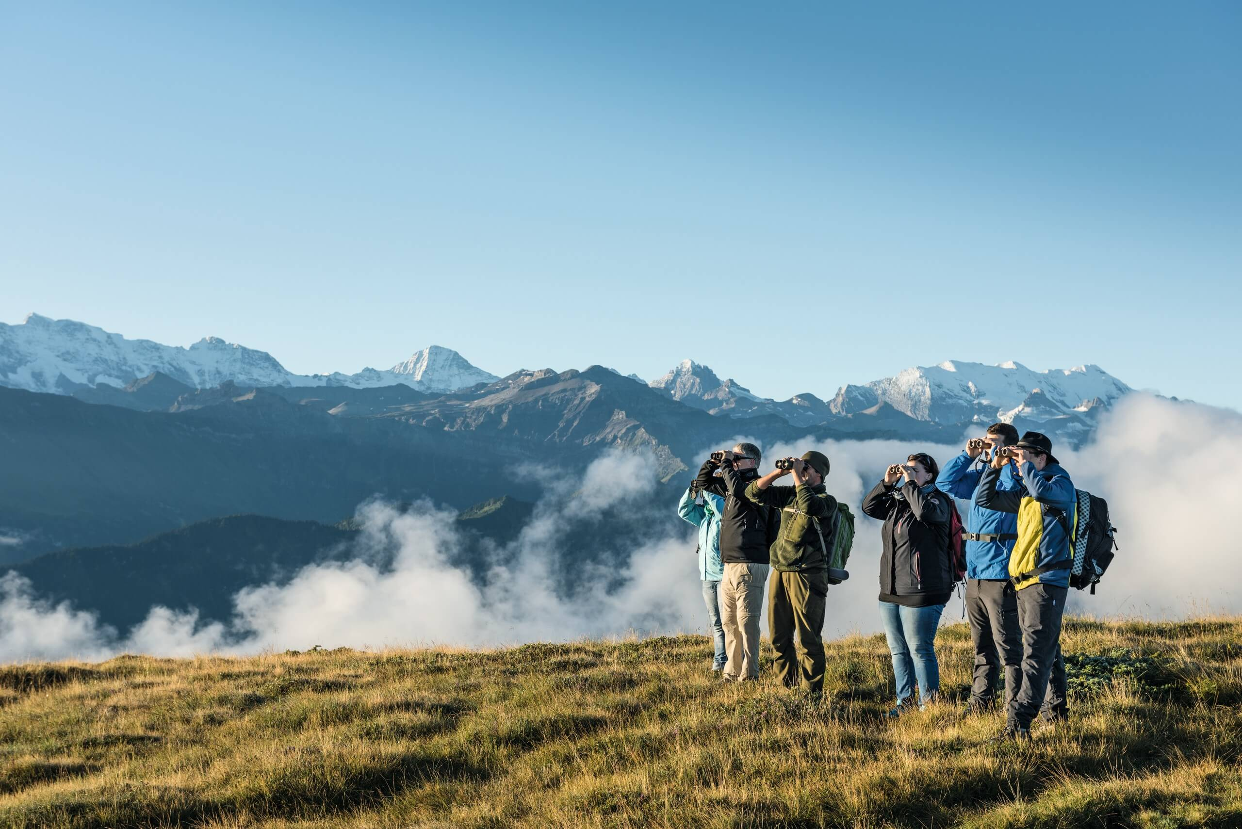 niederhorn-wildbeobachtungen-herbst-gruppe-panorama