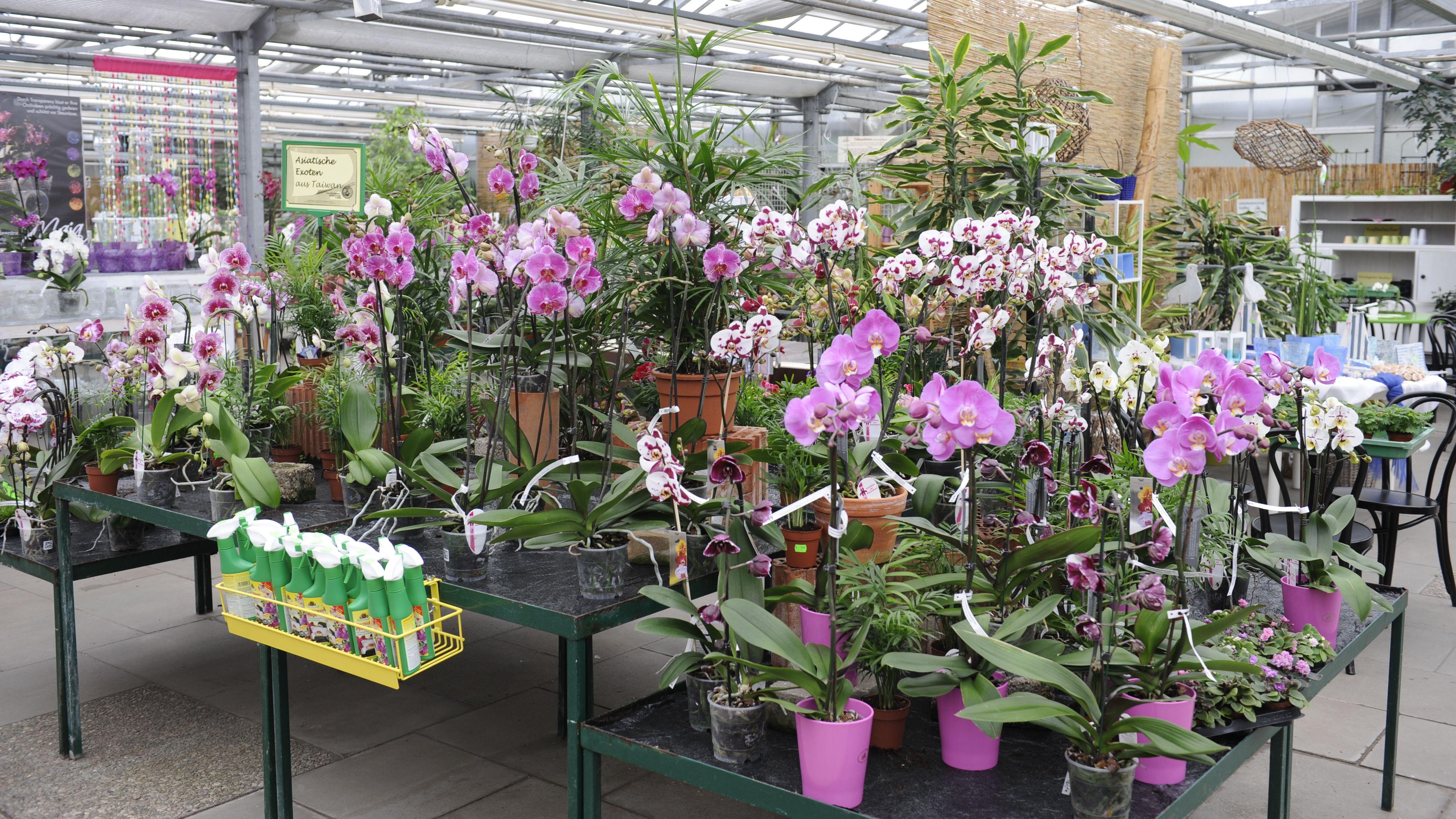 orchideenzentrum-wichmann1