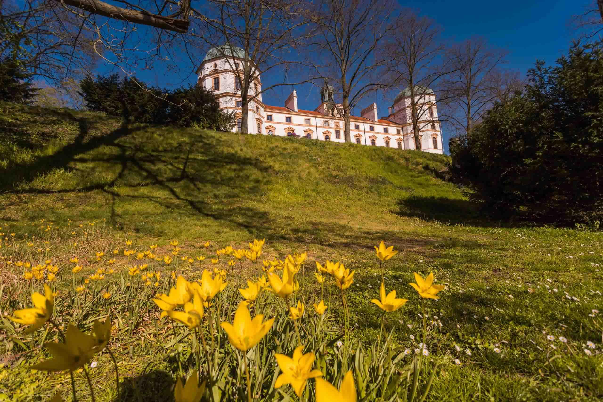 Celler Schlosspark, Blumen