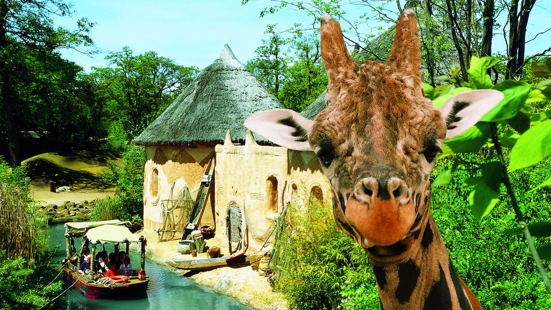 erlebnis-zoo-hannover-sambesi-giraffe-a