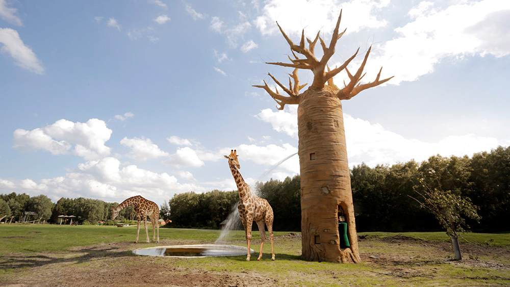 serengeti-safari-interactives