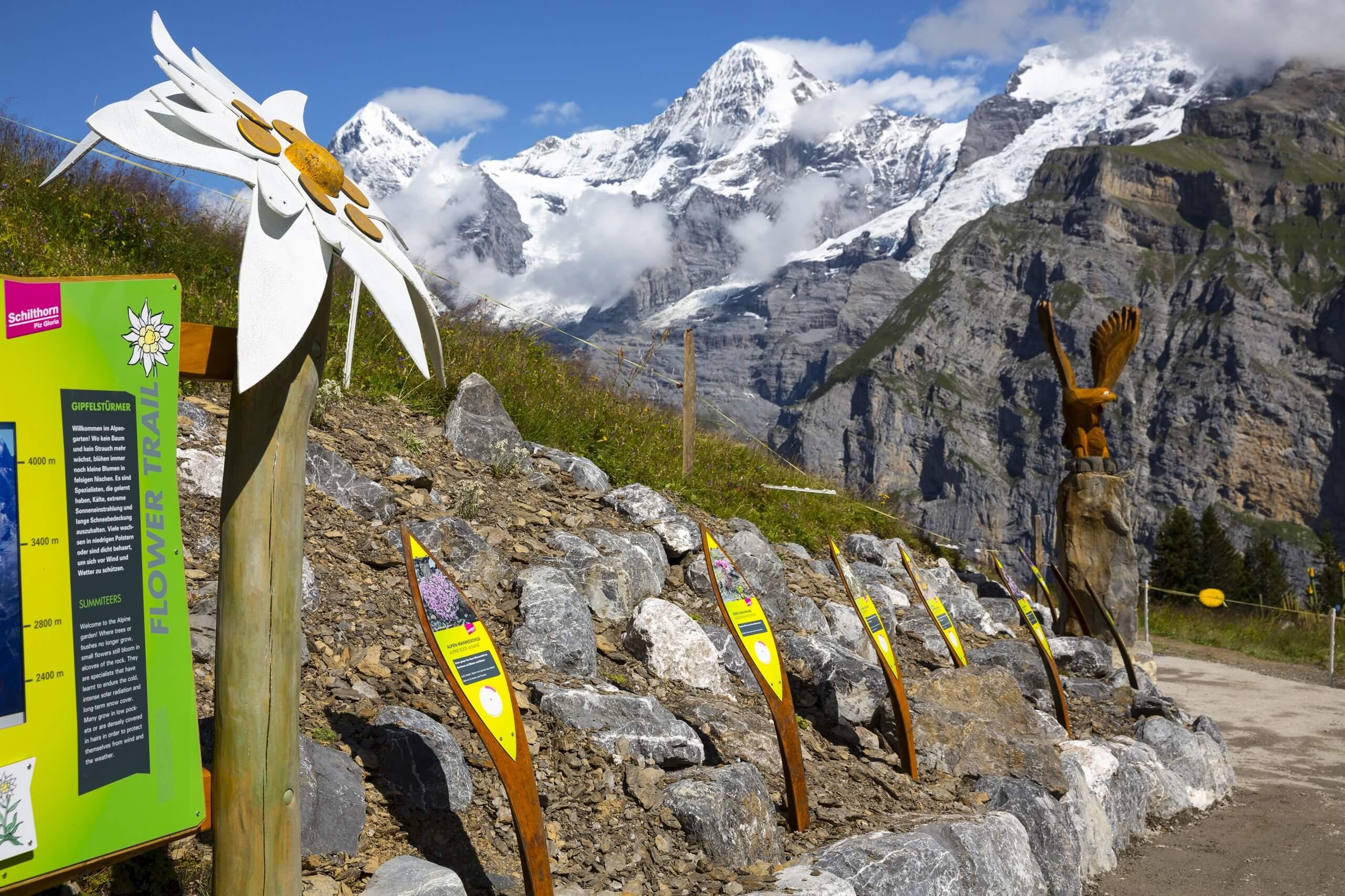schilthorn-allmendhubel-sommer-flower-trail
