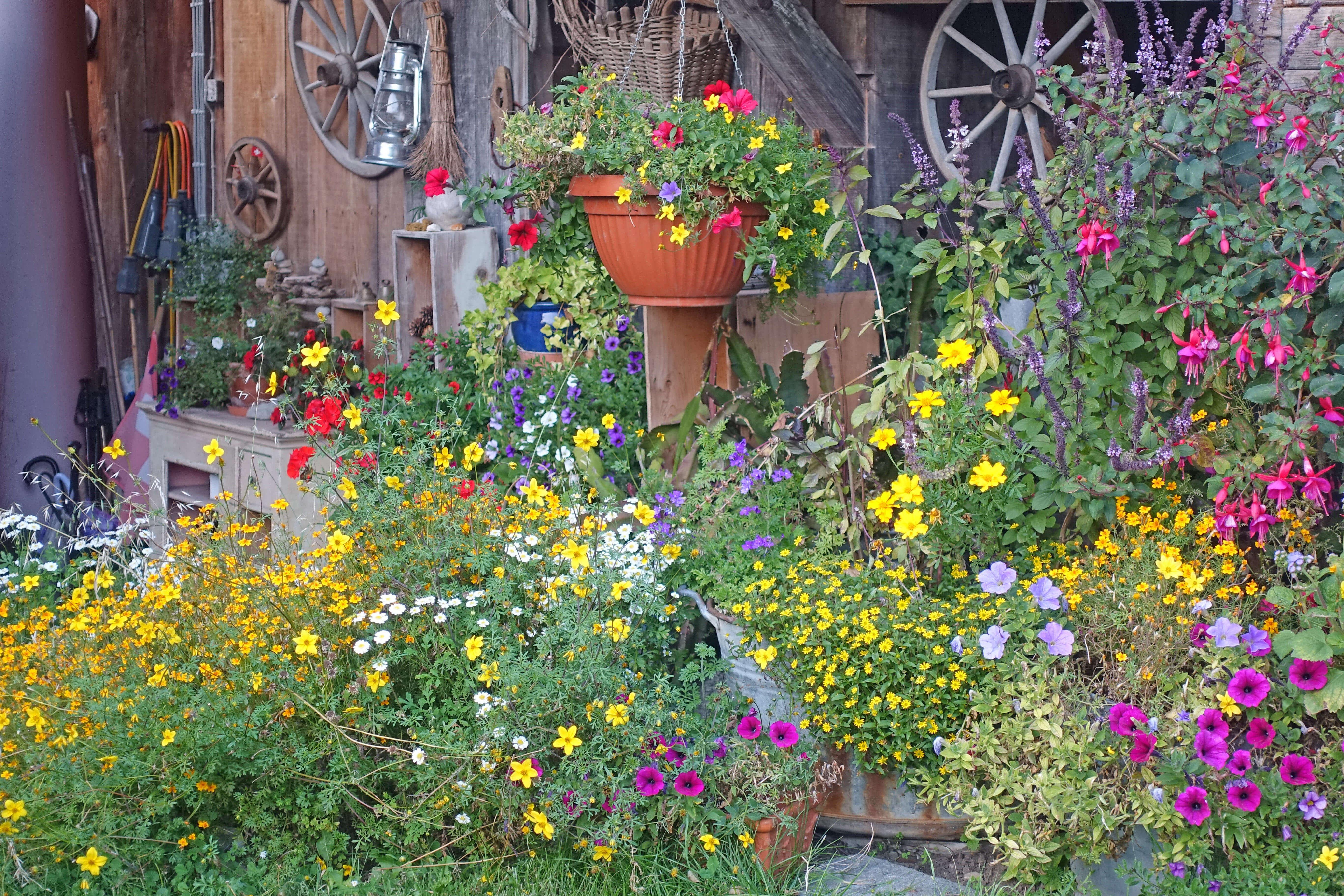 Blumen grün farbig Chrützhof