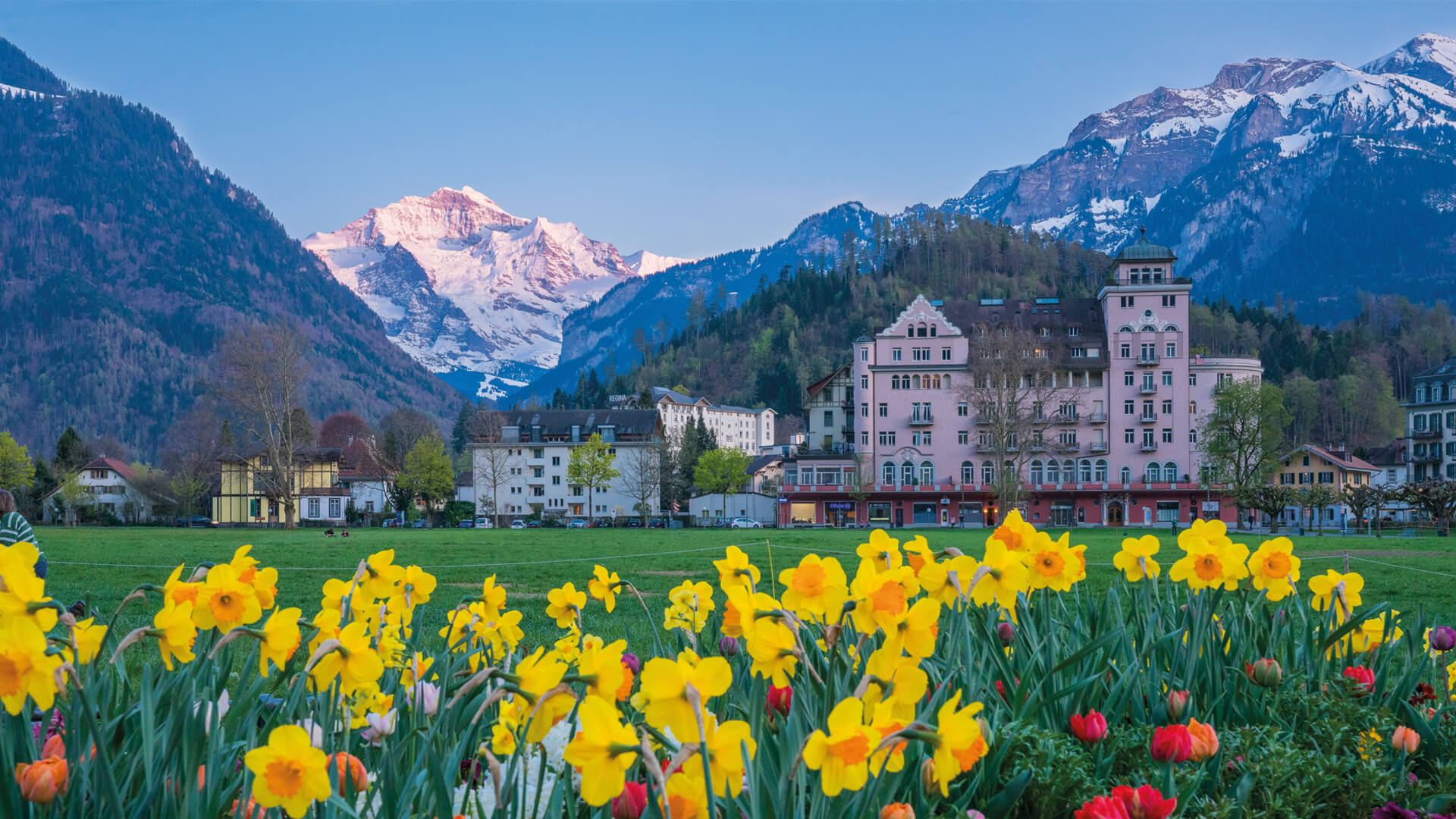 photo-tours-interlaken-sommer-blumen-hoehematte