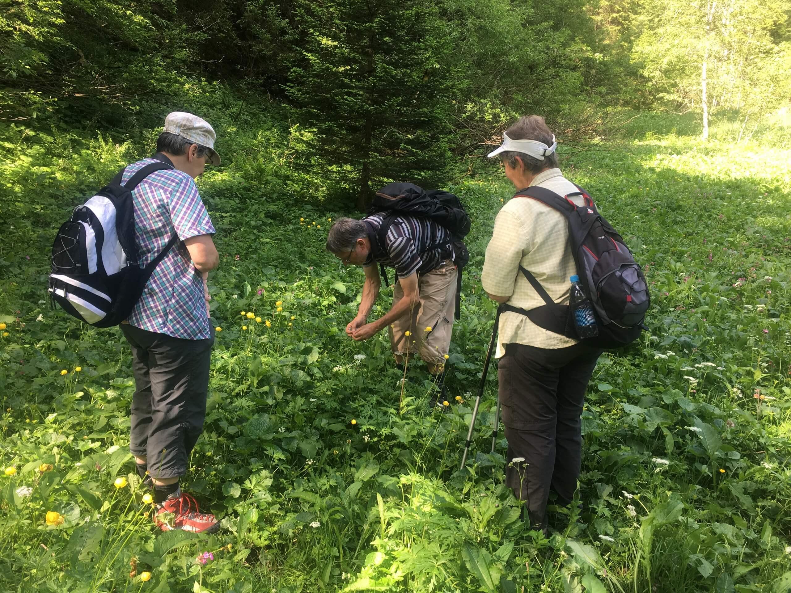 aeschi-suldtal-botanische-exkursionen