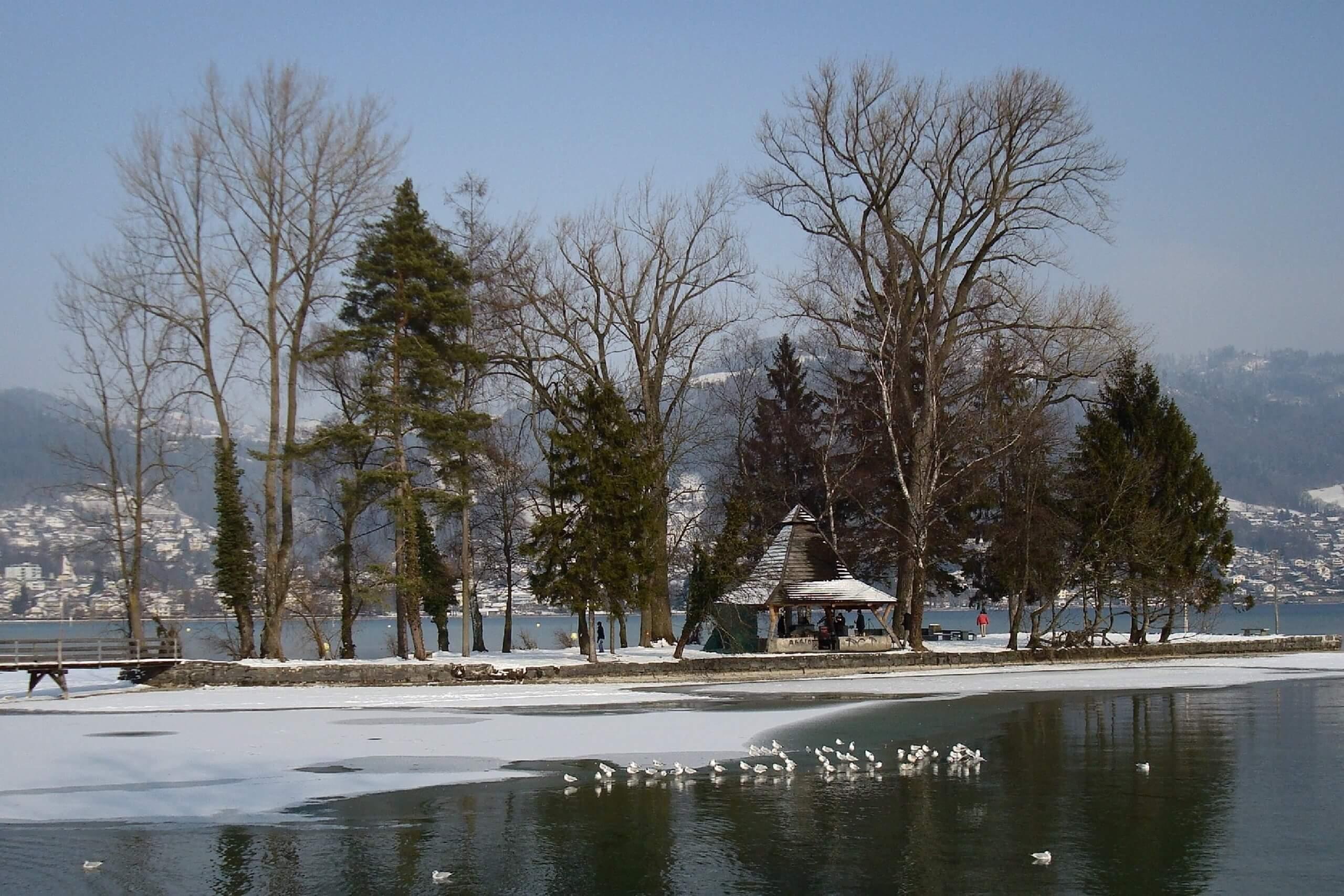 thun-grunder-inseli-thunersee-winter