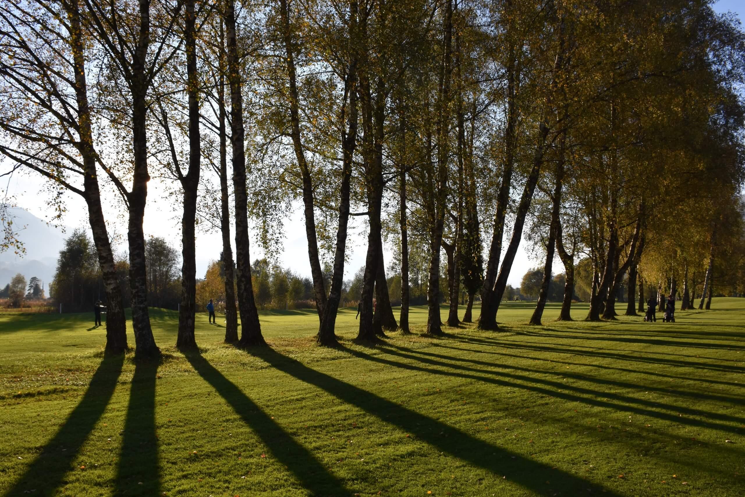 unterseen-golfplatz-baeume-sommer