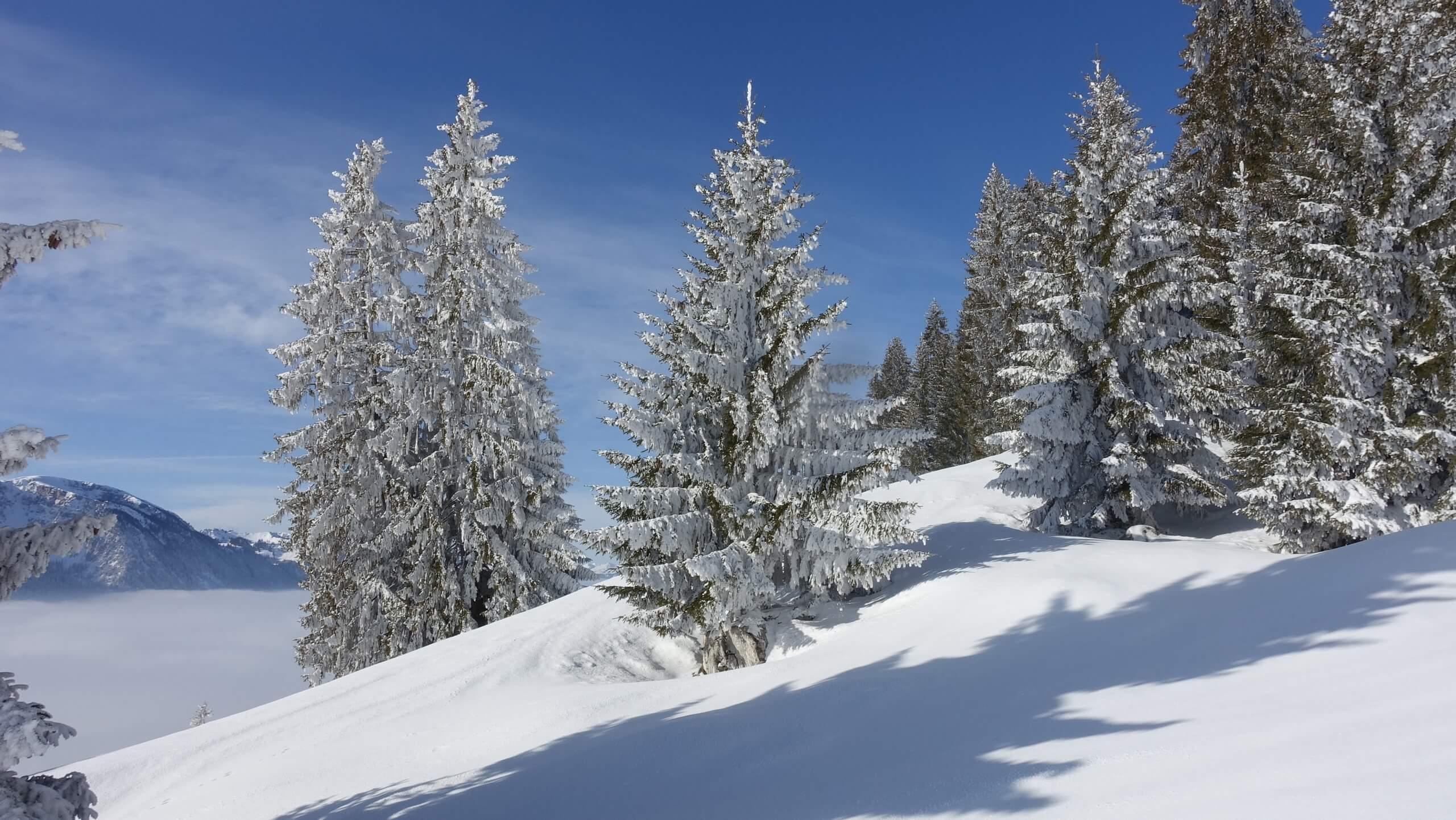 diemtigtal-schneeschuhwandern-winter-unterhalb-vorderstockenalp-erlenbach