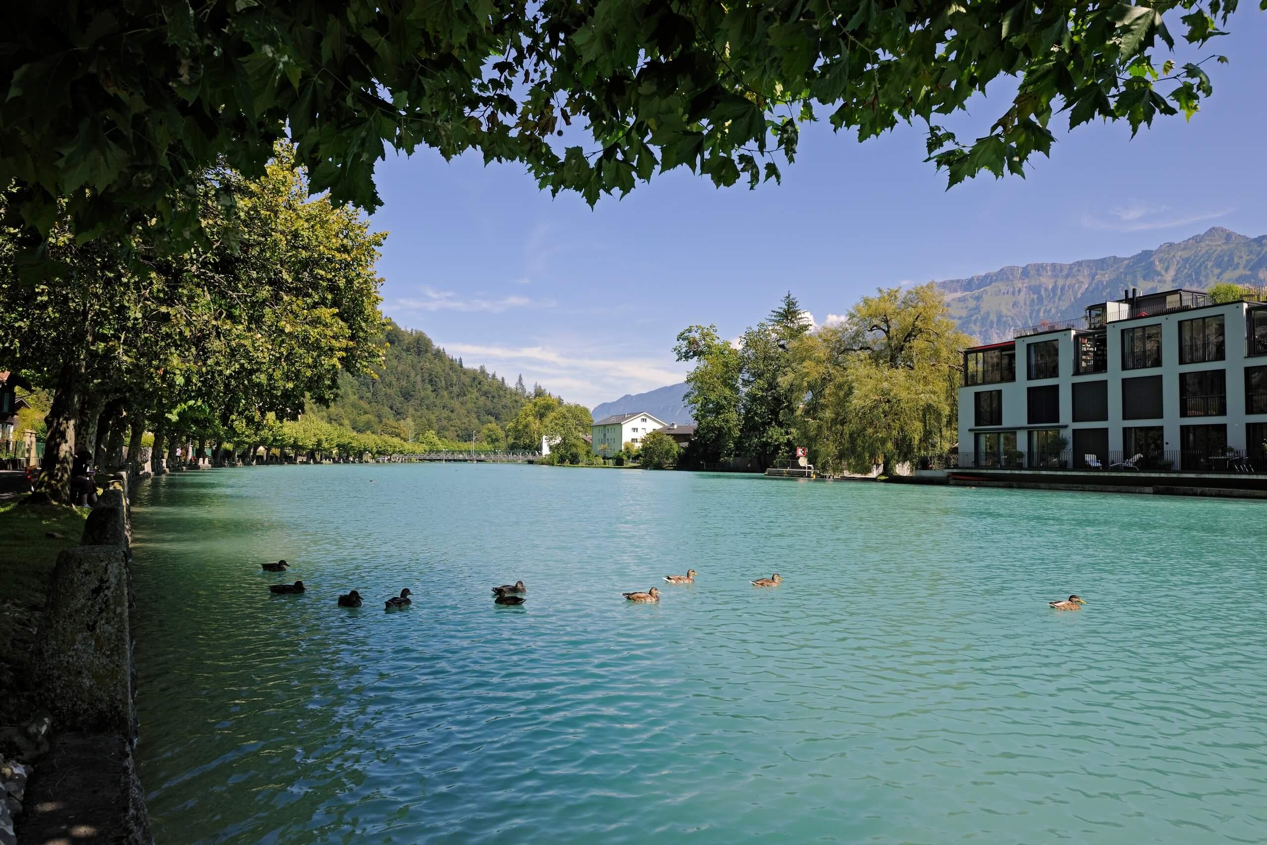 unterseen-altstadt-aare-enten-schwimmen-sommer