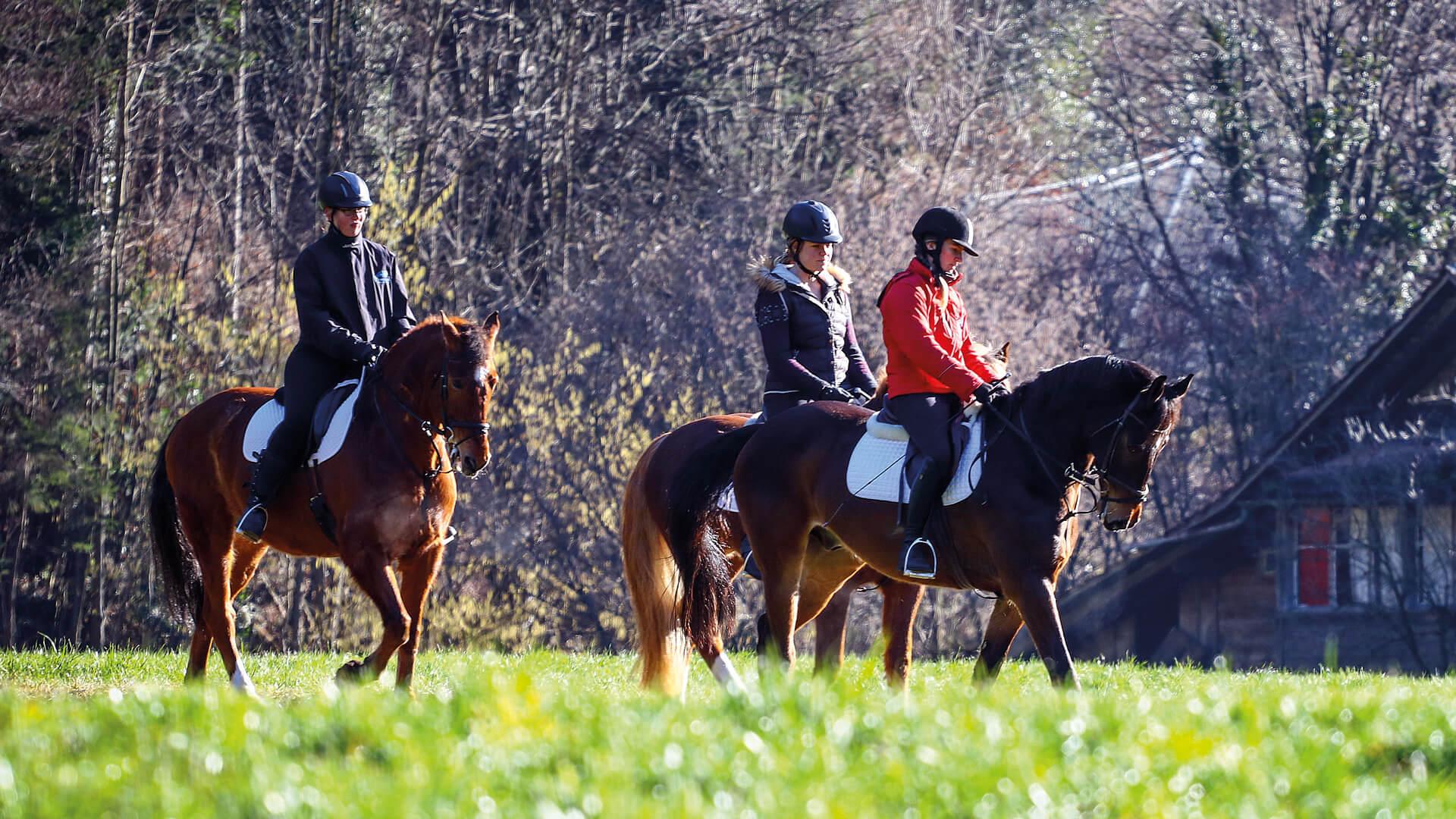 interlaken-reitschule-voegeli-pferde-wiese-reiten