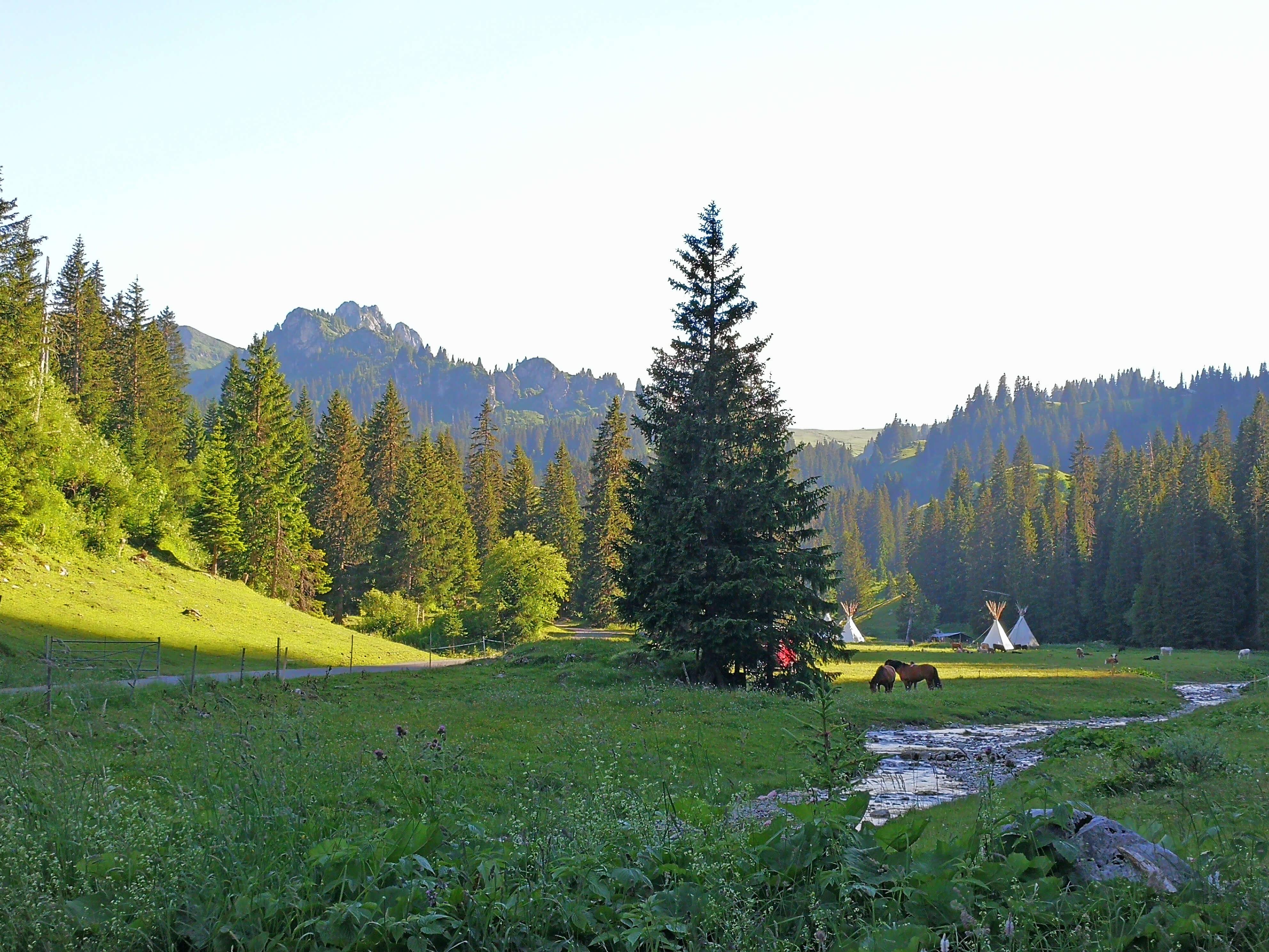 Feuerstelle direkt am Bergbach