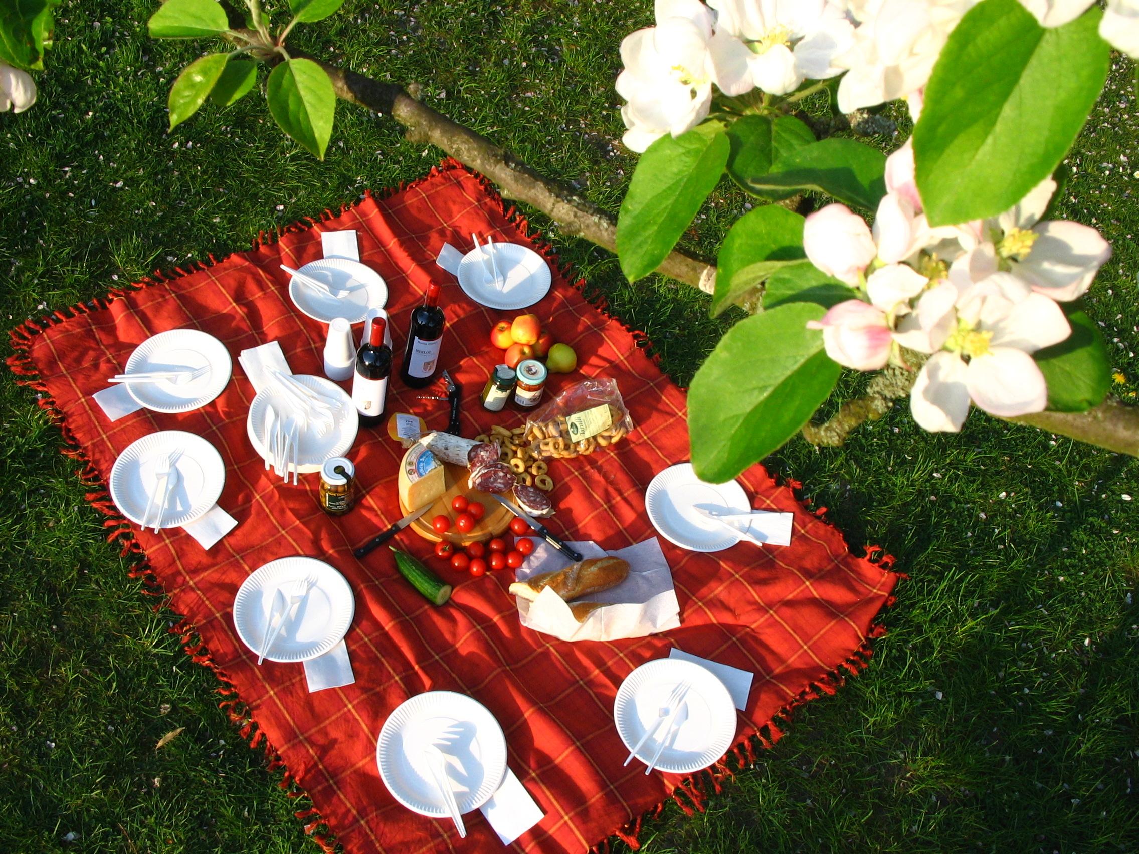 Picknick im Frühling