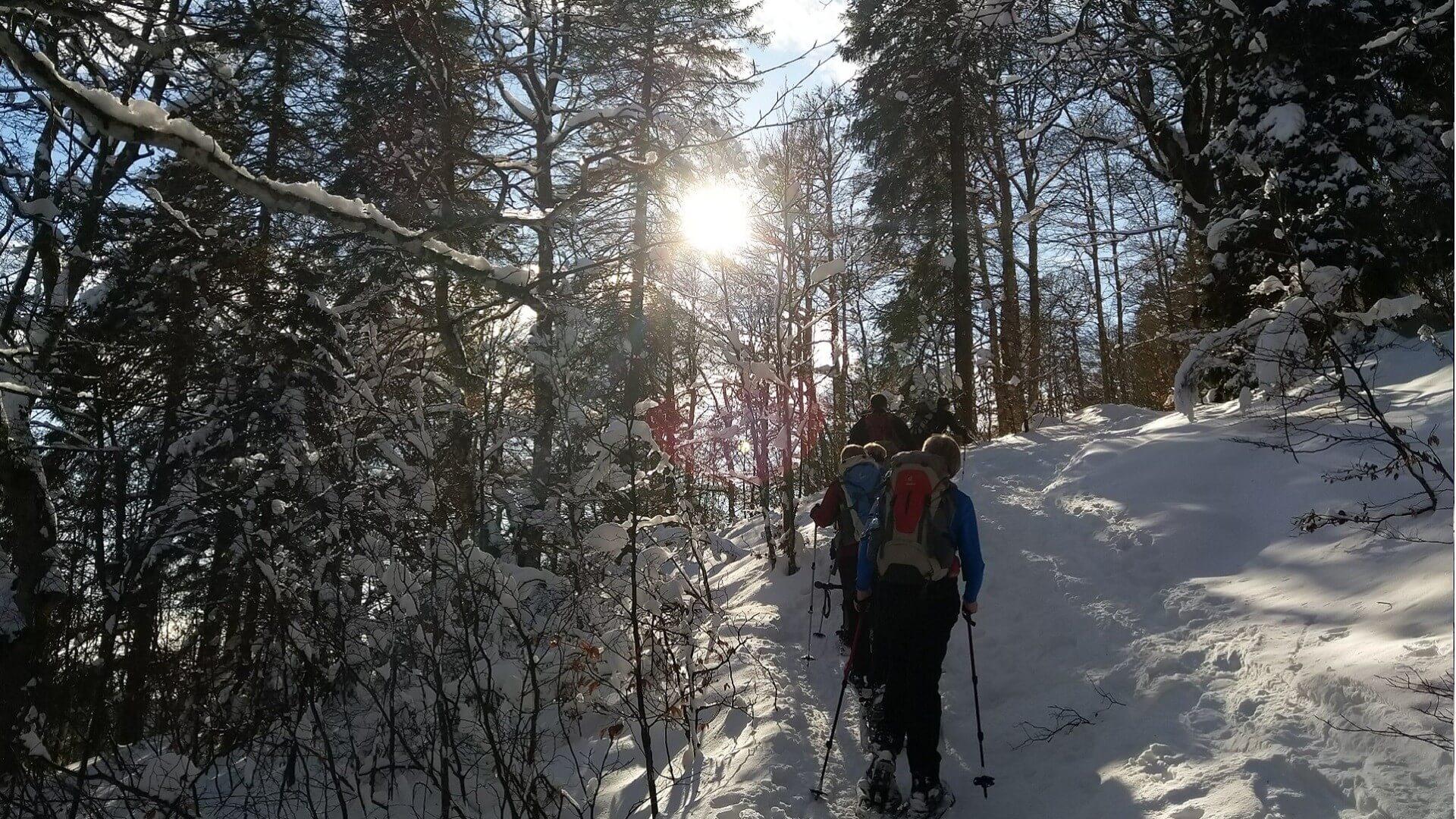 schwanden-schneeschuhtour-winter-gruppe-im-wald