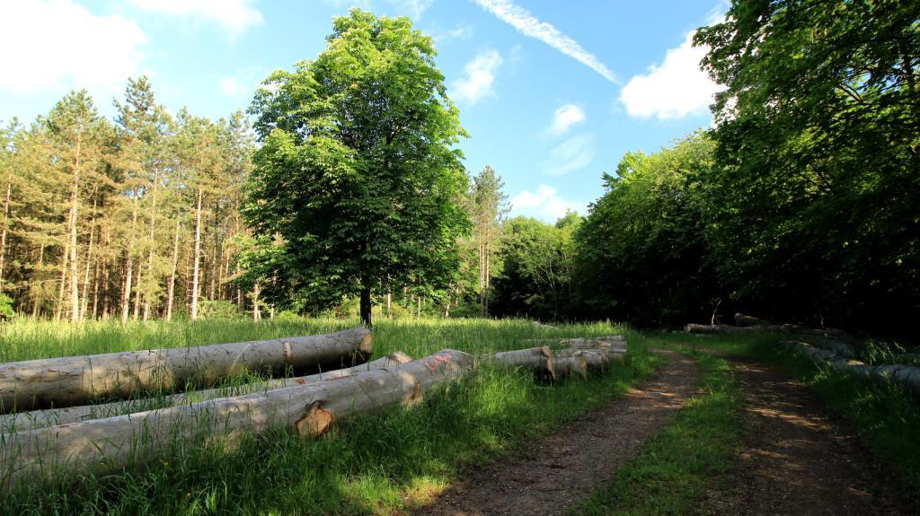 Hochfläche auf dem Heineberg mit Waldwiese