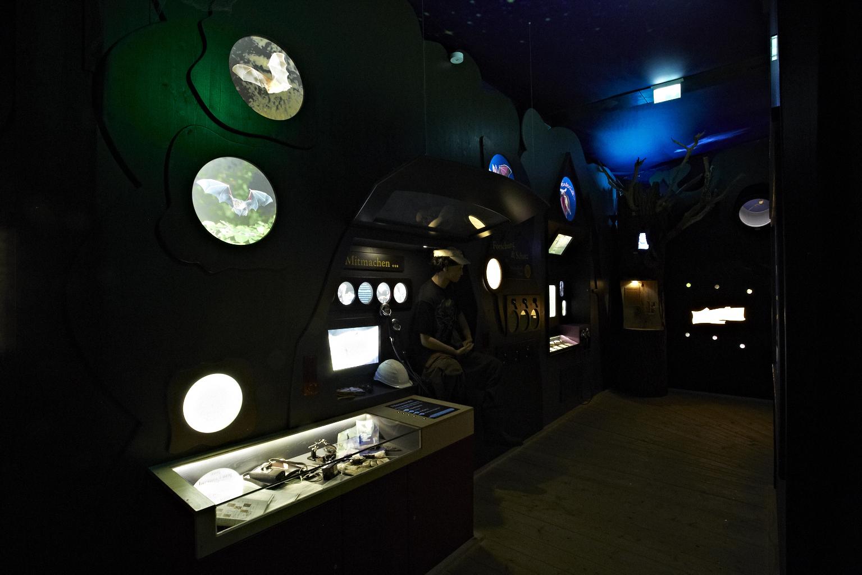 FledermausReich Ausstellung