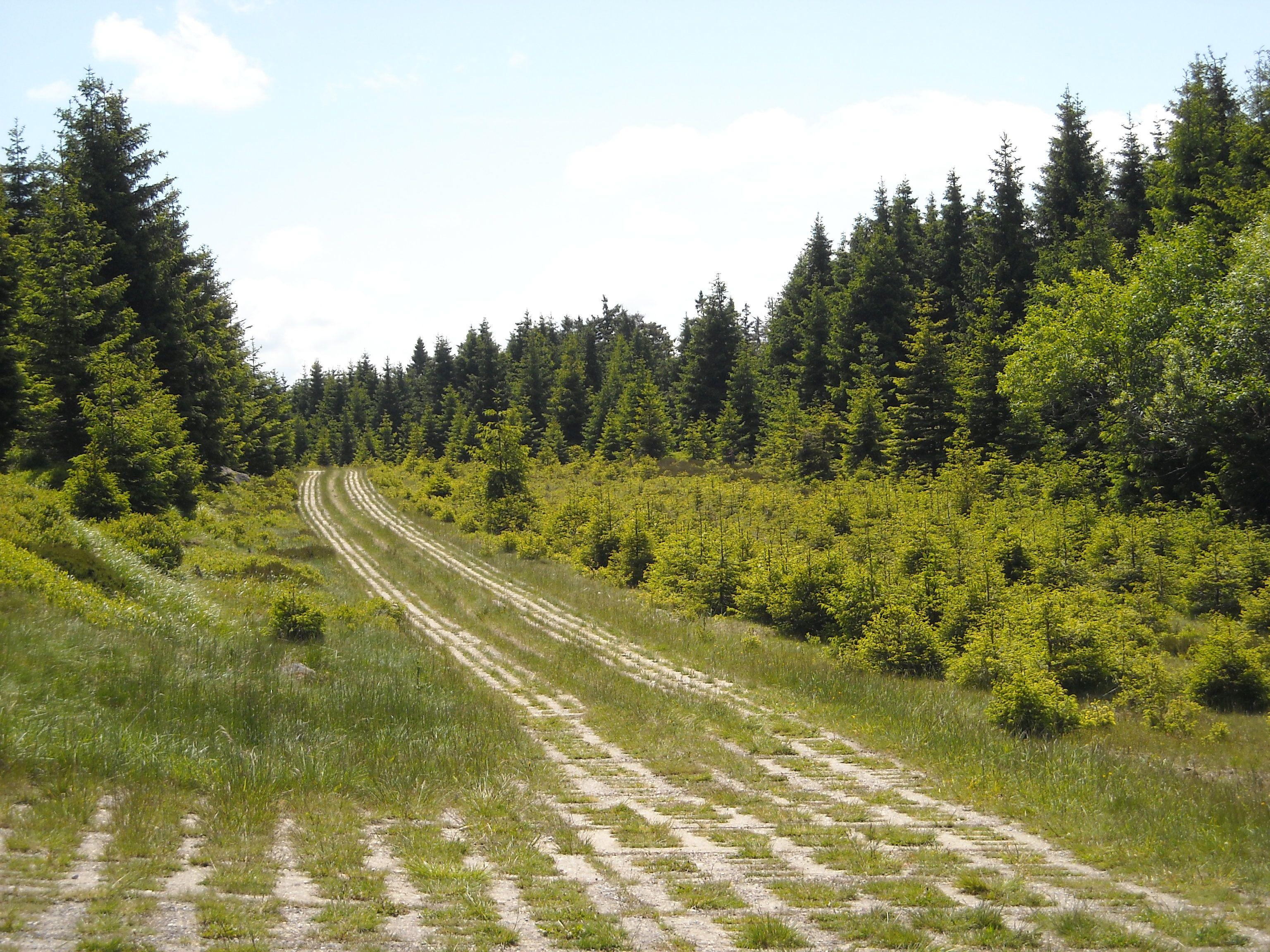 Harzer Grenzweg, Kolonnenweg