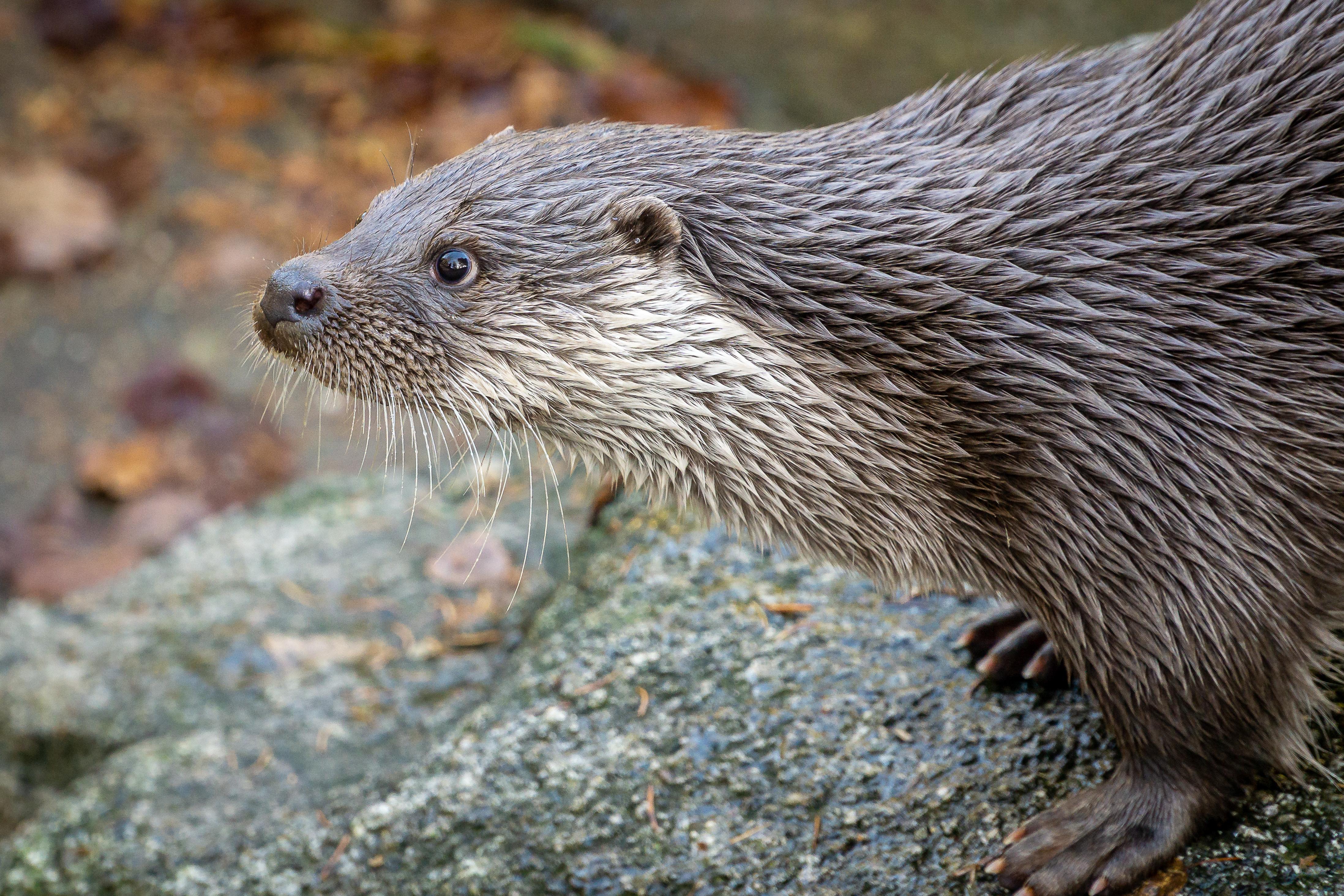 Otter im Tierpark Thale