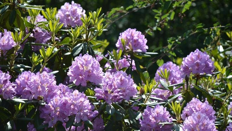 Blumen im Weltwald