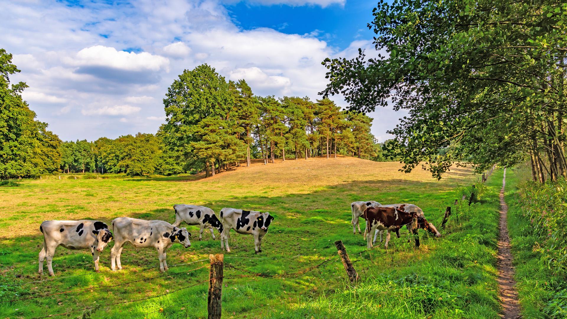 Sind die Kühe etwa Namensgeber vom Kuhbachtal?