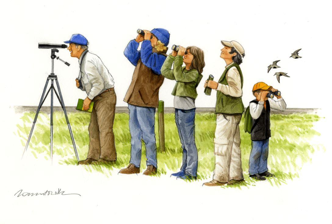 »Watt zum Kieken« - ein Spaziergang für alle Vogelfreunde