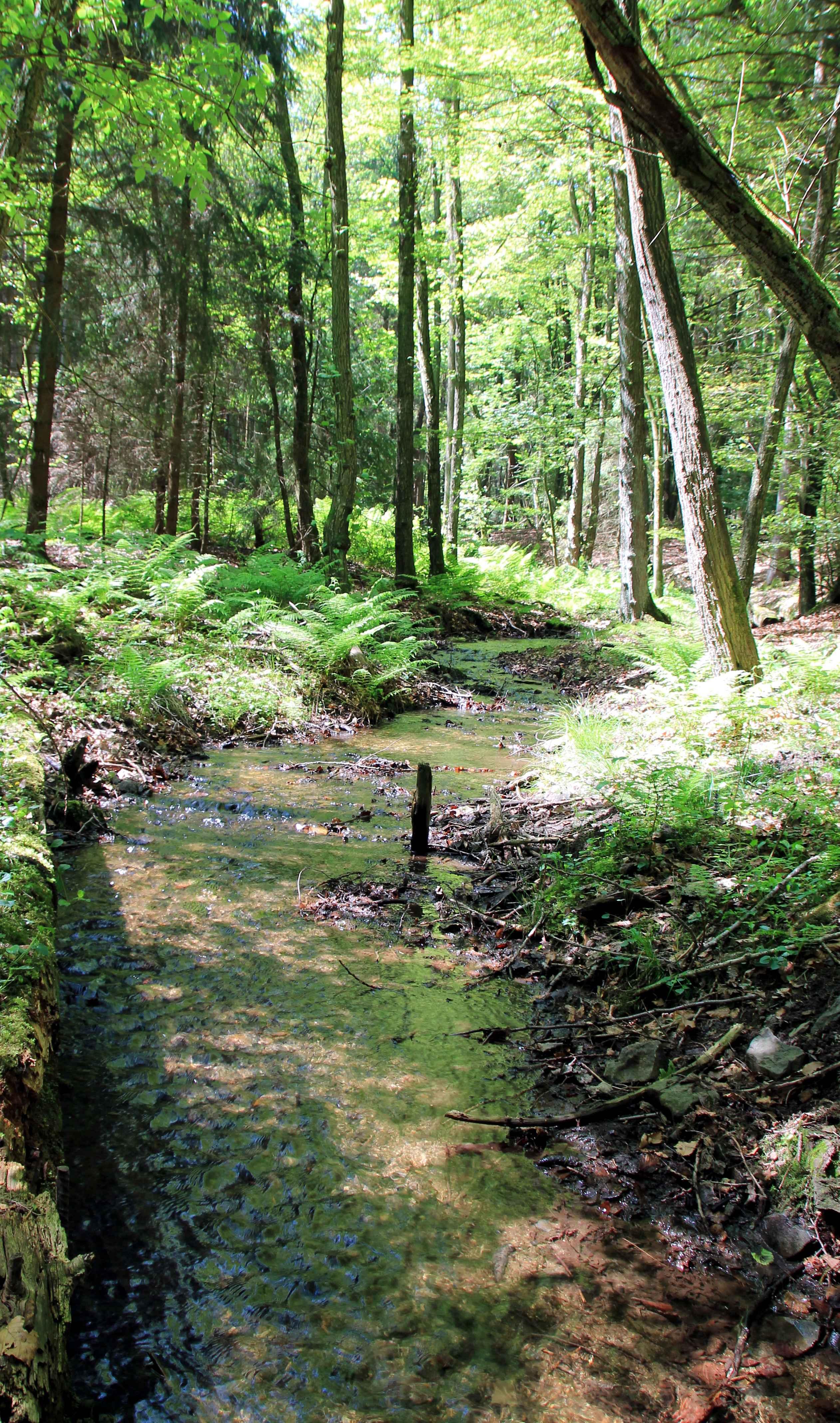 Bachlauf im Silixer Wald