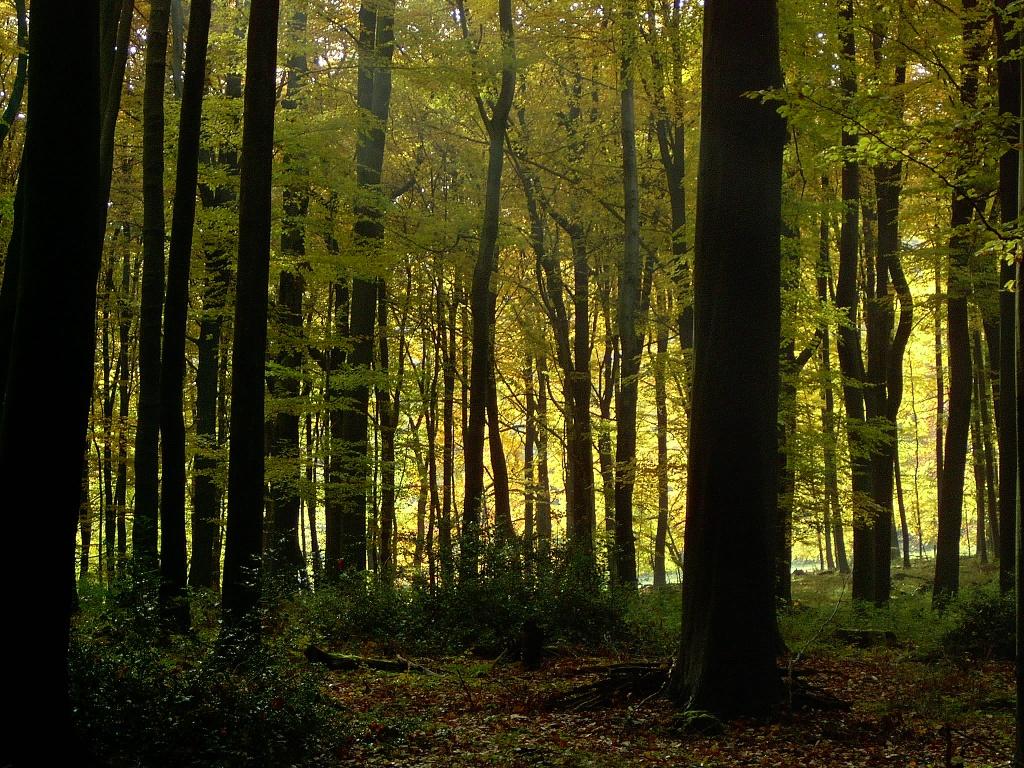 Naturbelassener Wald