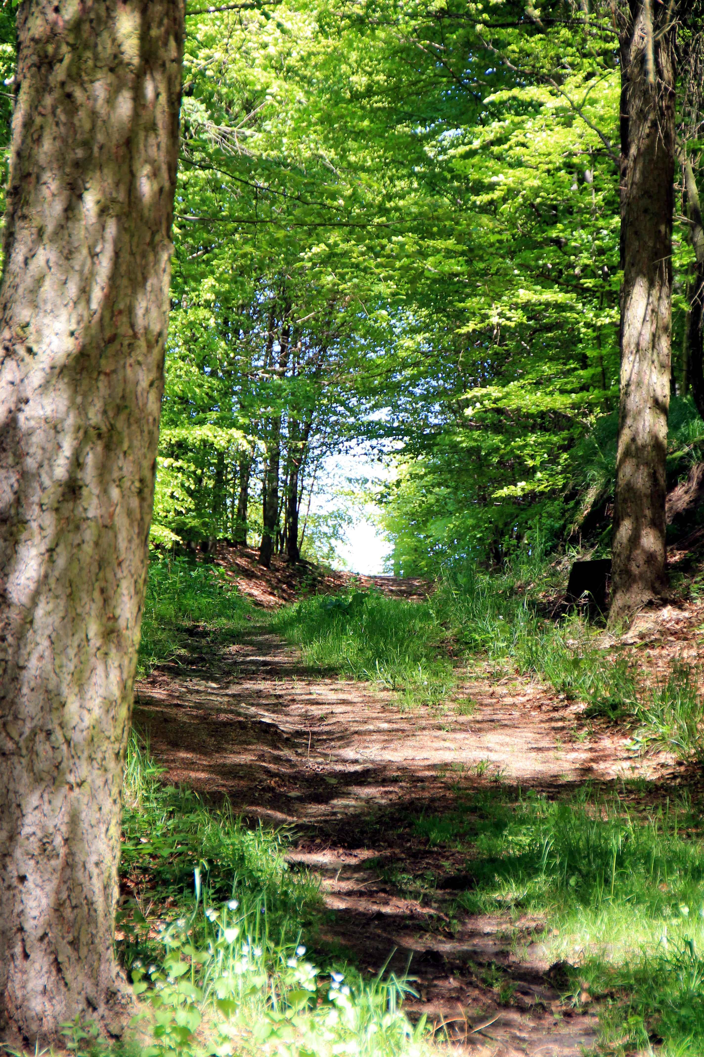Eichhörnchenweg in Alverdissen